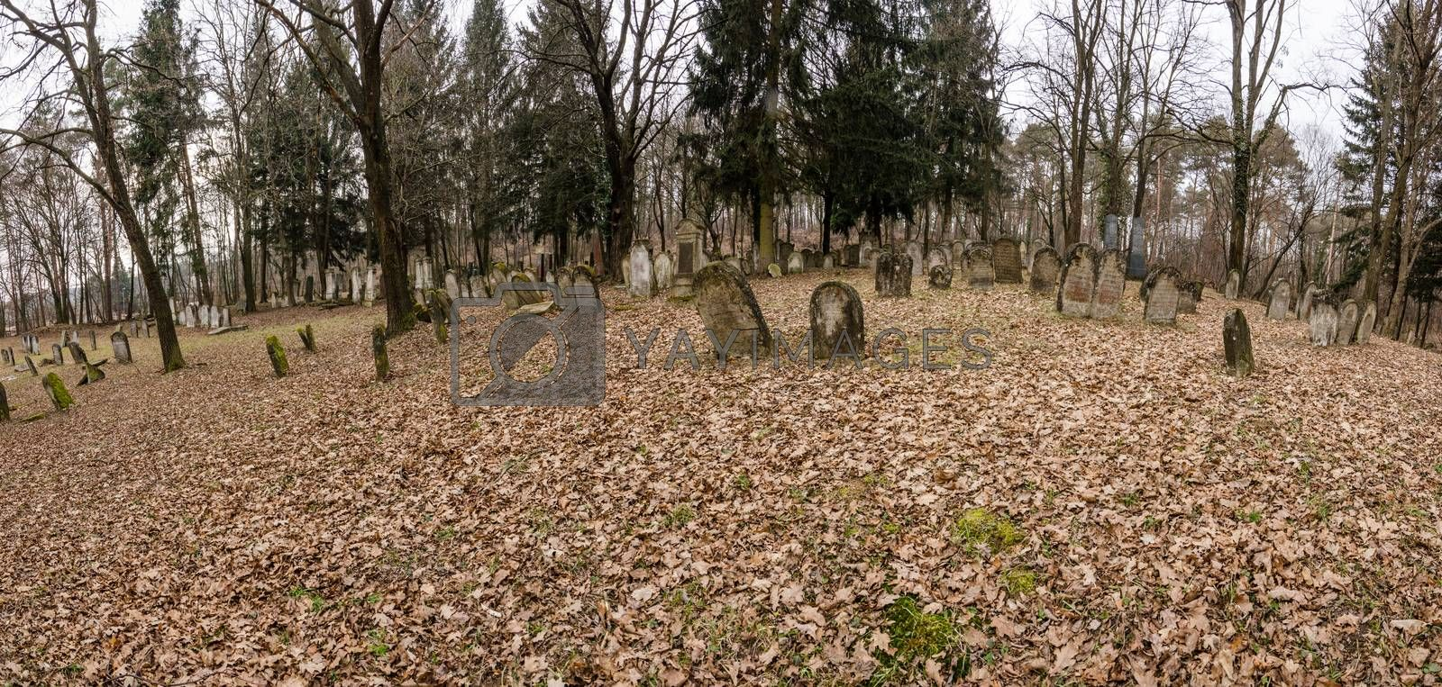 Jewish cemetery in the forest panorama view
