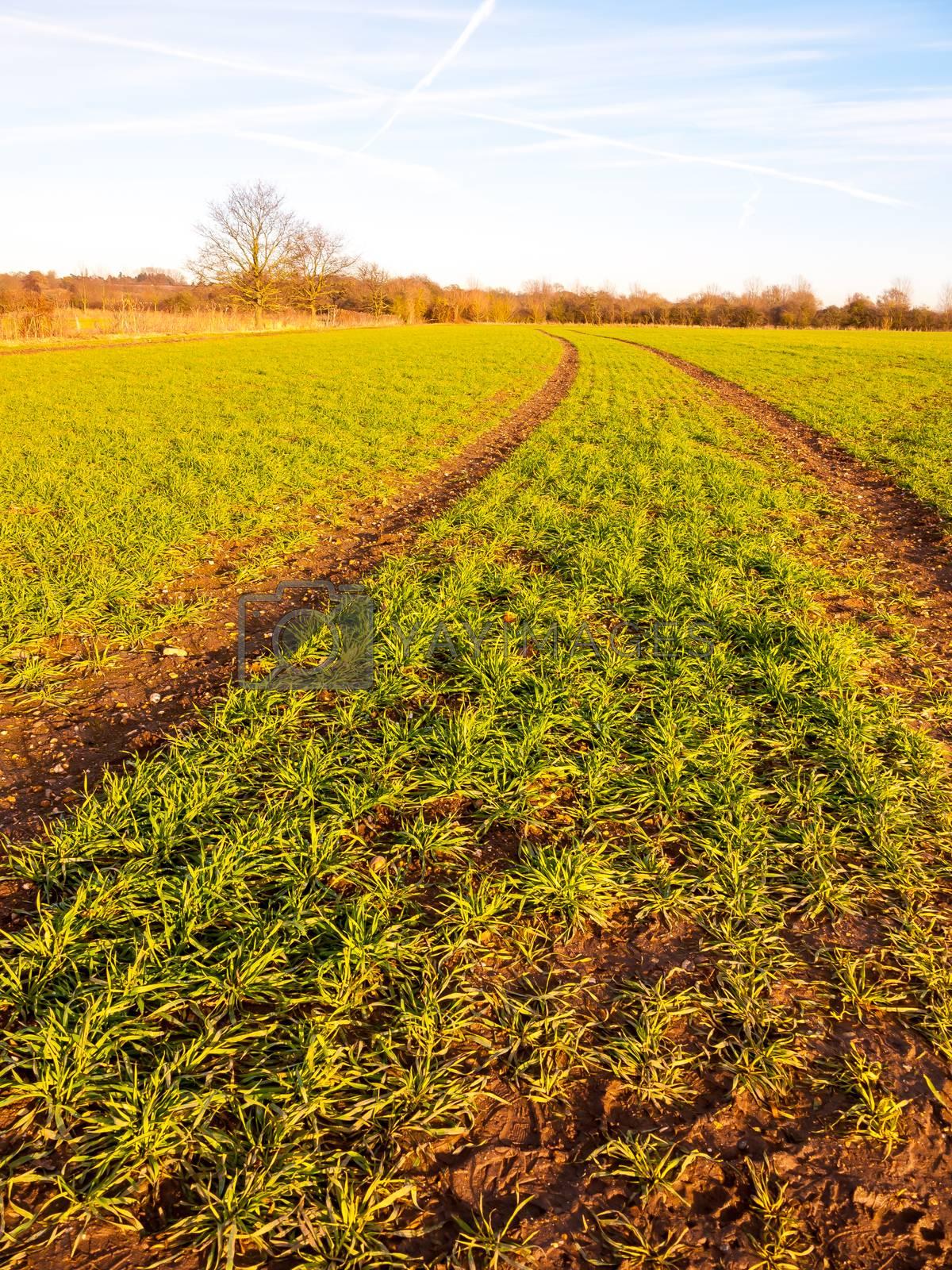 farm fields rows growing green plants fresh winter landscape by callumrc