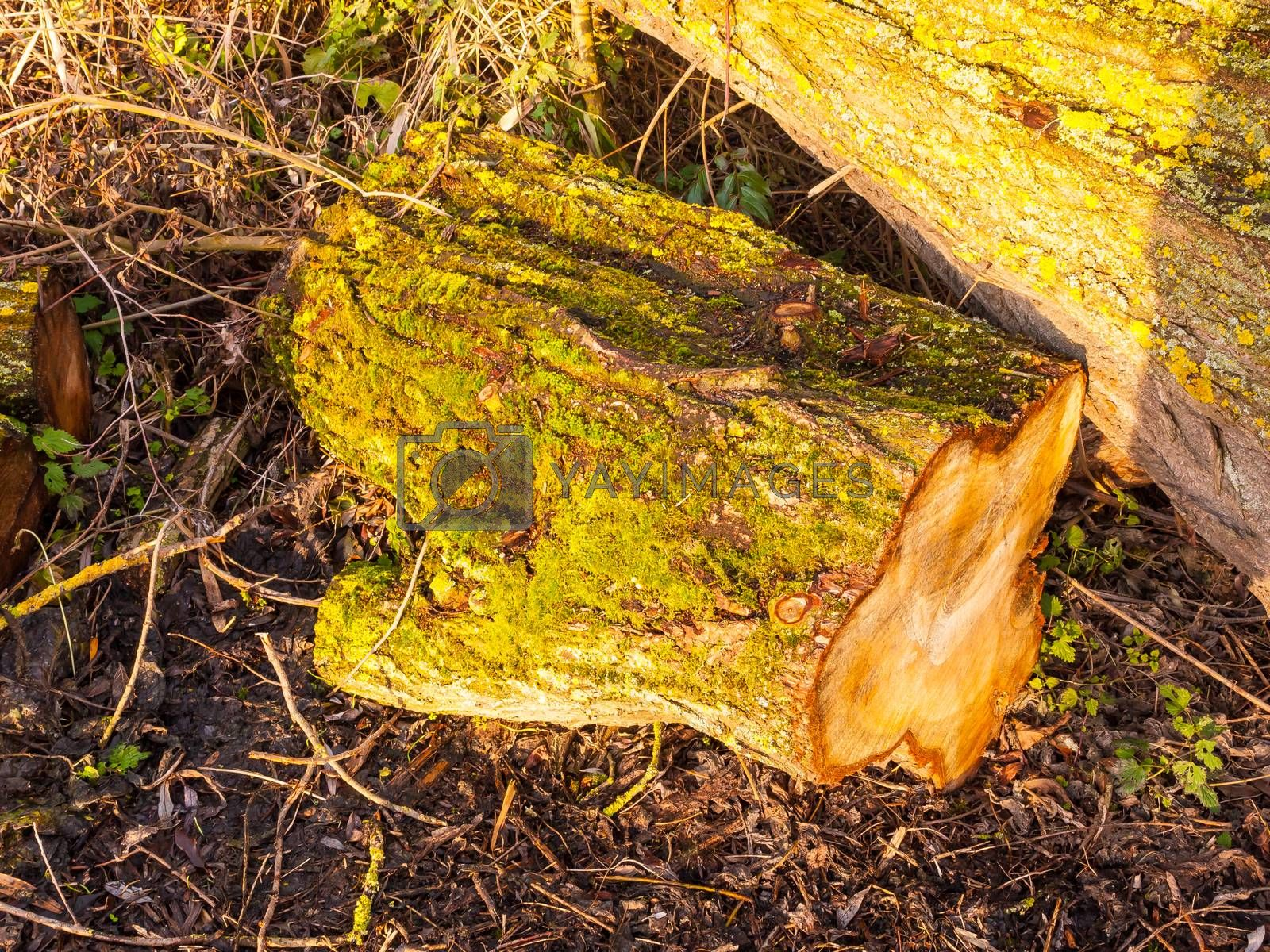close up of tree bark stump with green moss growing on bark on g by callumrc