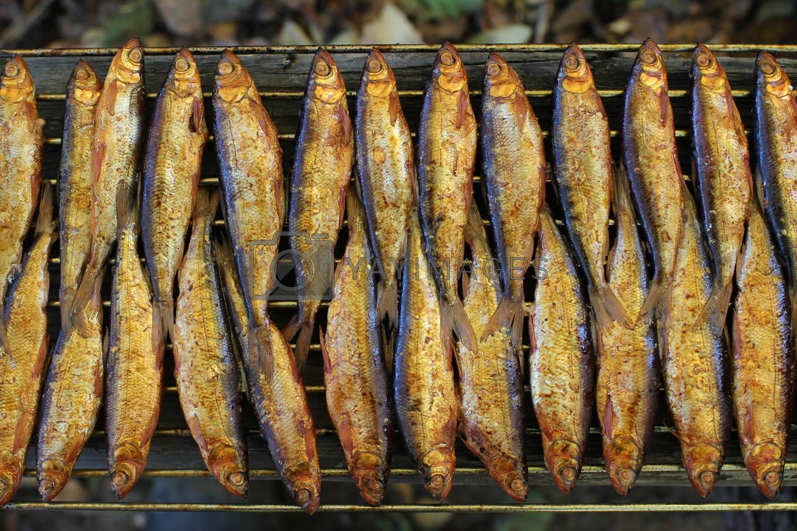 Hot smoked whitefish on the grill by mrivserg