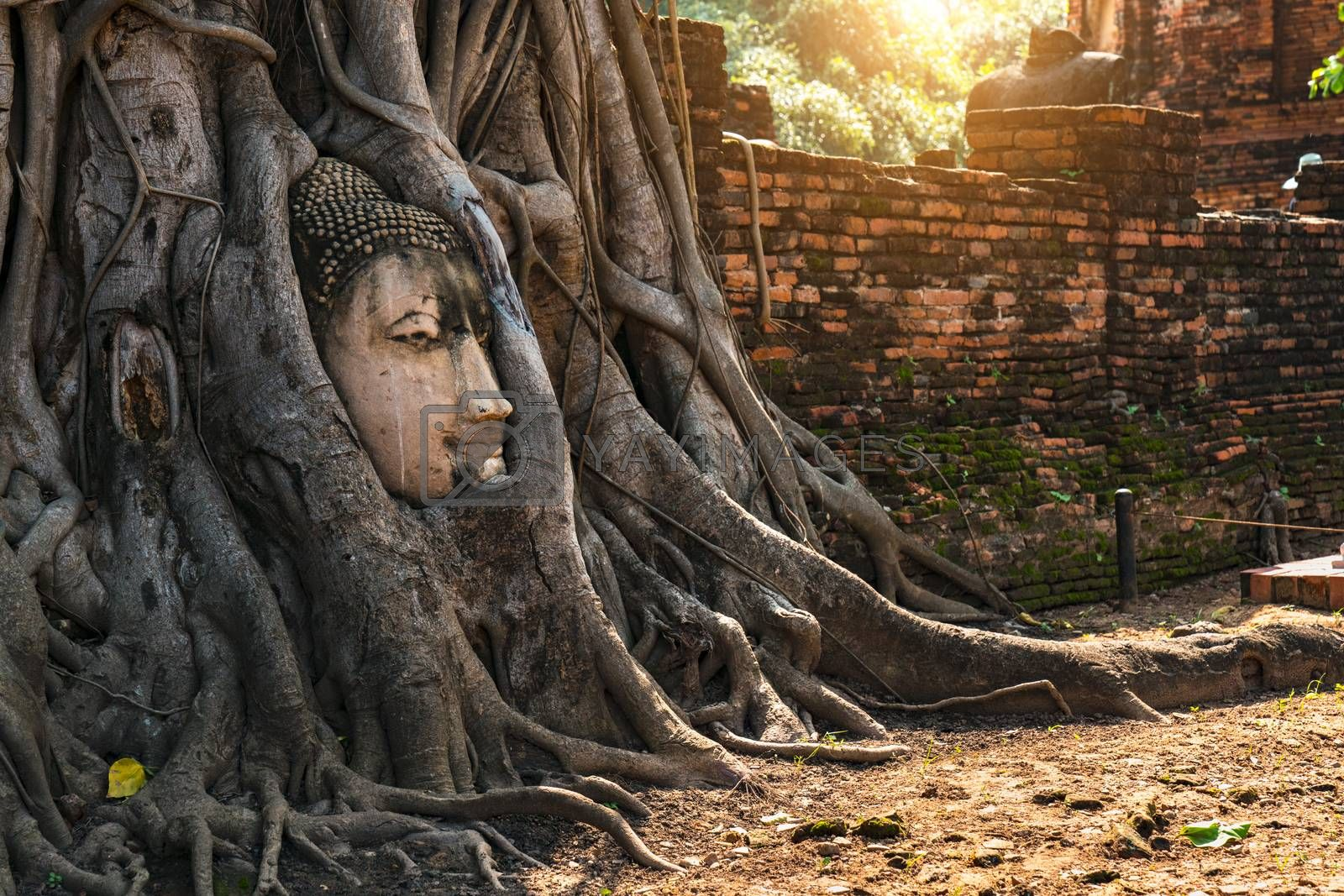 Head of Buddha statue in the tree roots at Wat Mahathat (Temple of the great relics), Ayutthaya, Thailand.