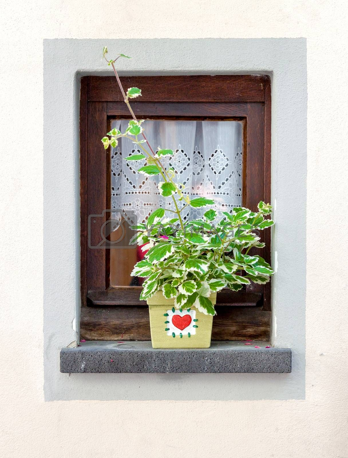 Small home window decorated with flower pot at summer