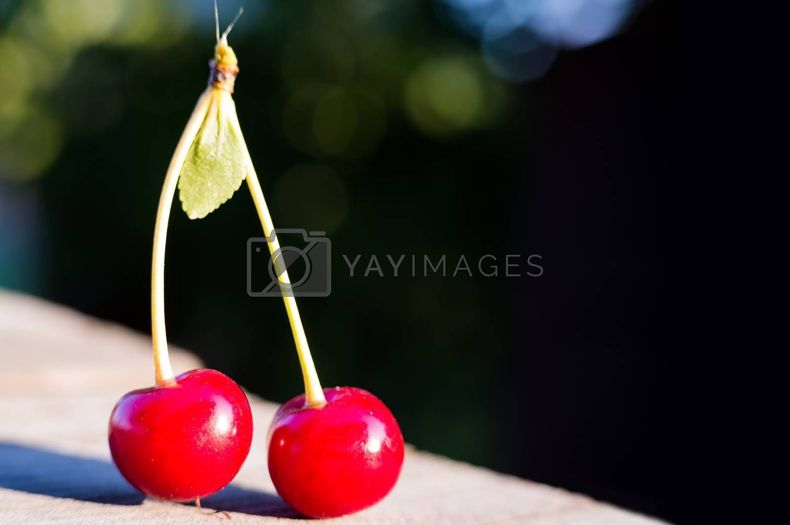 Two raw sweet cherries on an old wooden background with a copy empty space for text