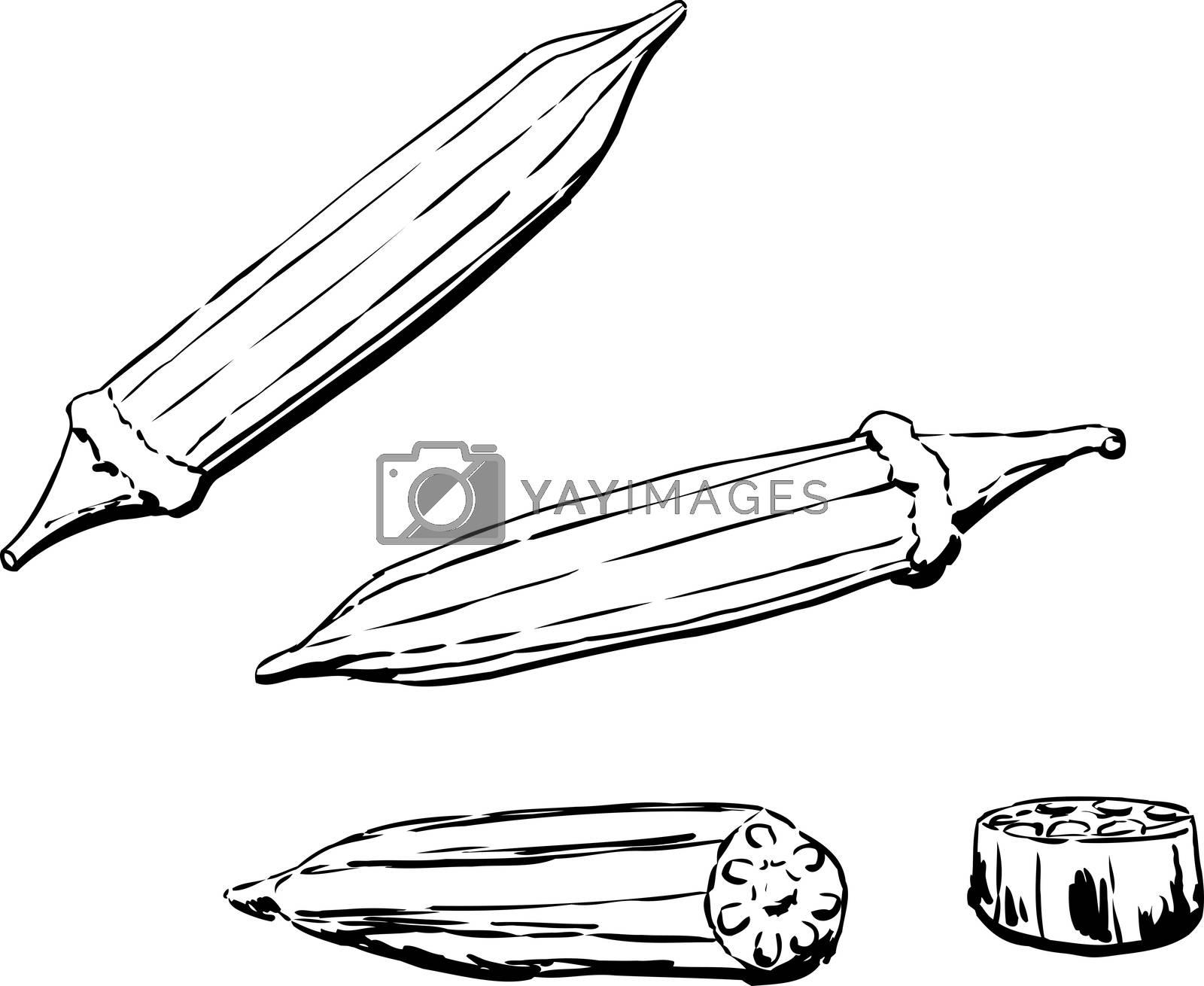 Outlined illustration of okra pod over white background
