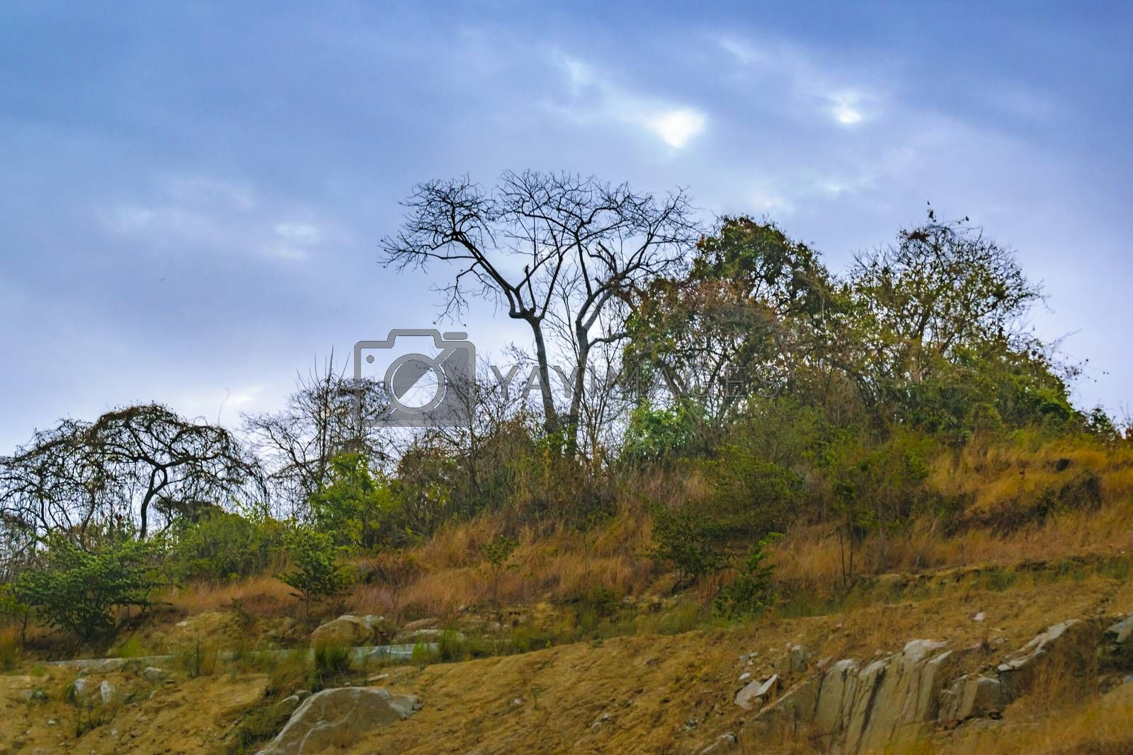 Tropical Countryside Landscape Scene by DanFLCreative