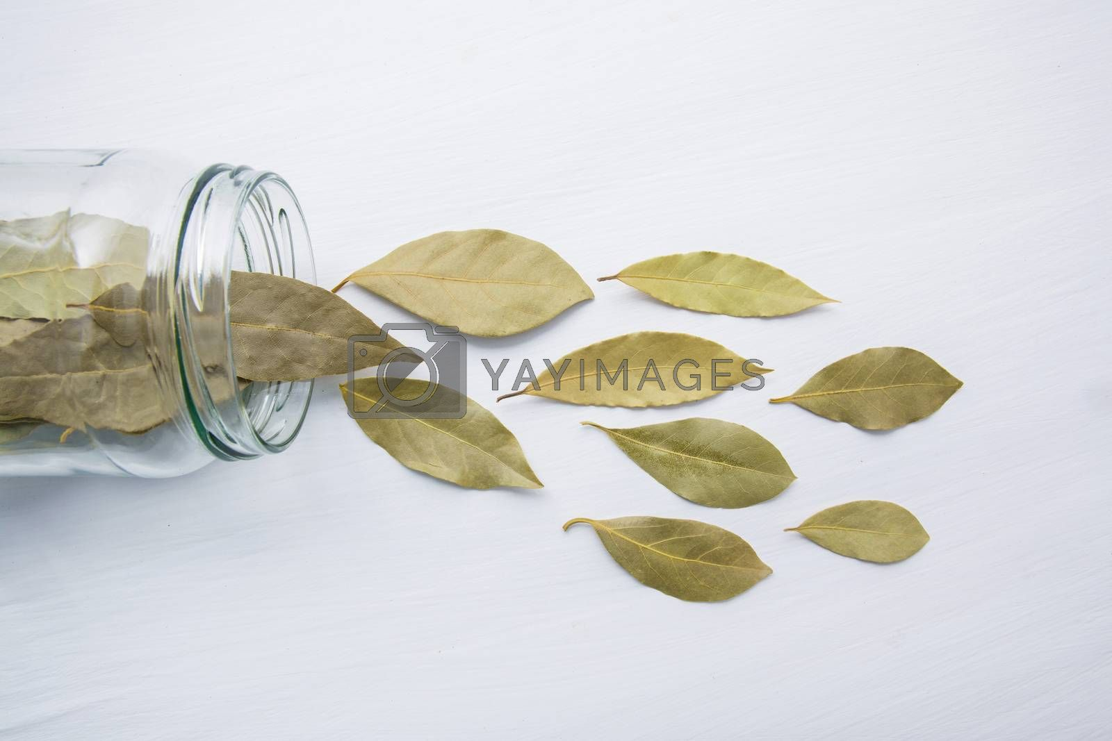 Dried bay leaves in glass jar on white wooden background. by Bowonpat