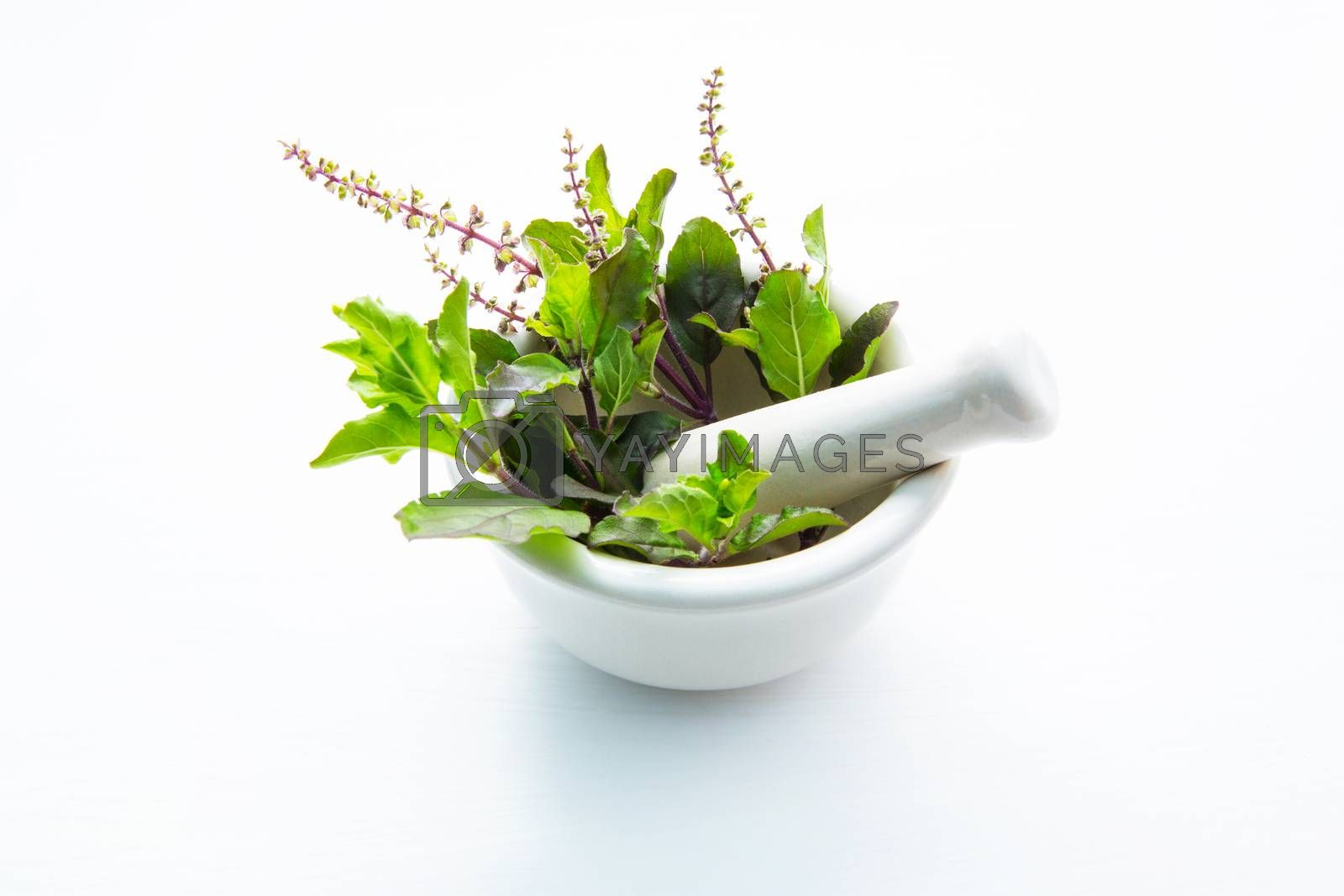 Holy Basil Leaves in porcelain mortar on white wooden background by Bowonpat