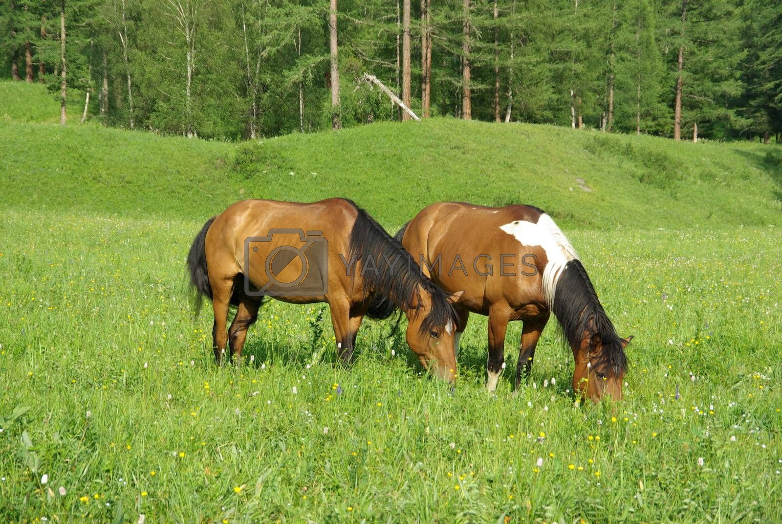 Horse among green grass in nature. Brown horse. Grazing horses in the village.