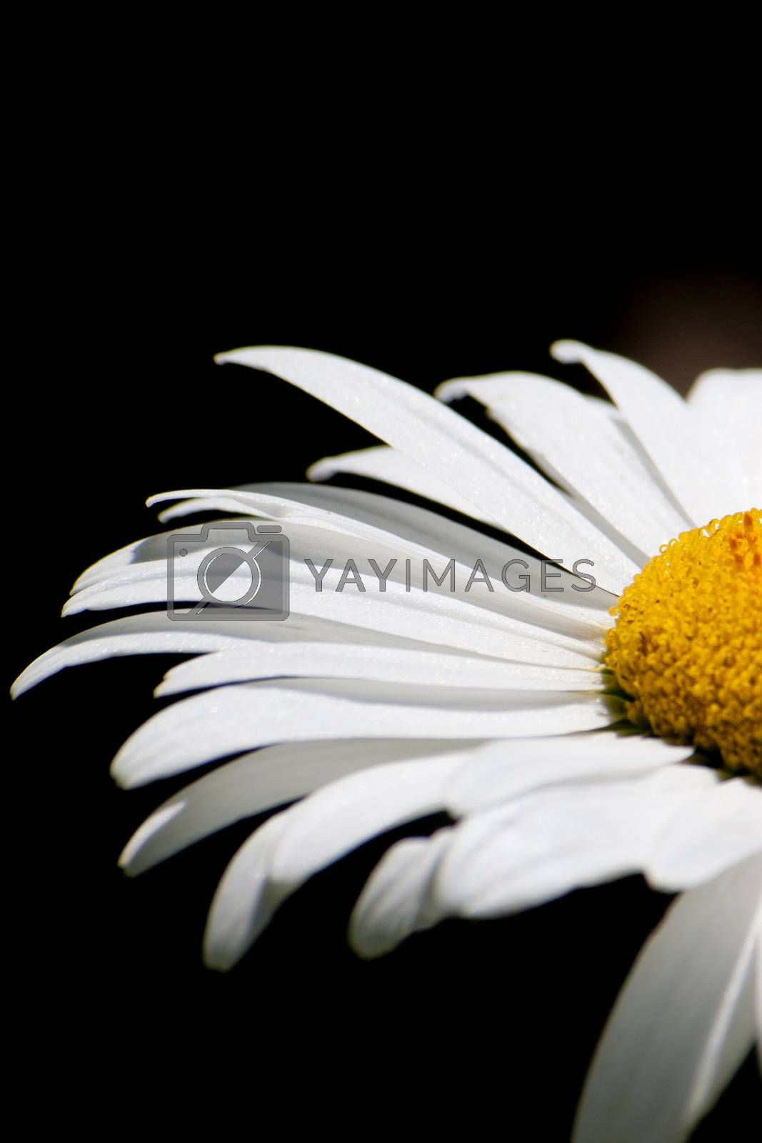 Beautiful flower macro with a close distance, background