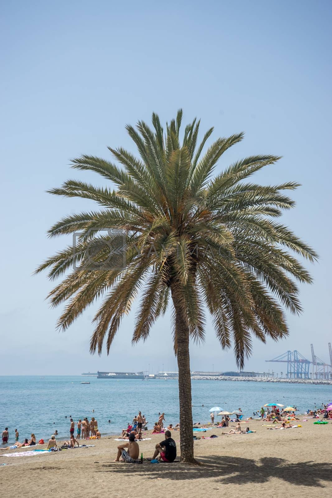 tall palm tree along the Malaguera beach with ocean in the background in Malaga, Spain, Europe with clear blue sky