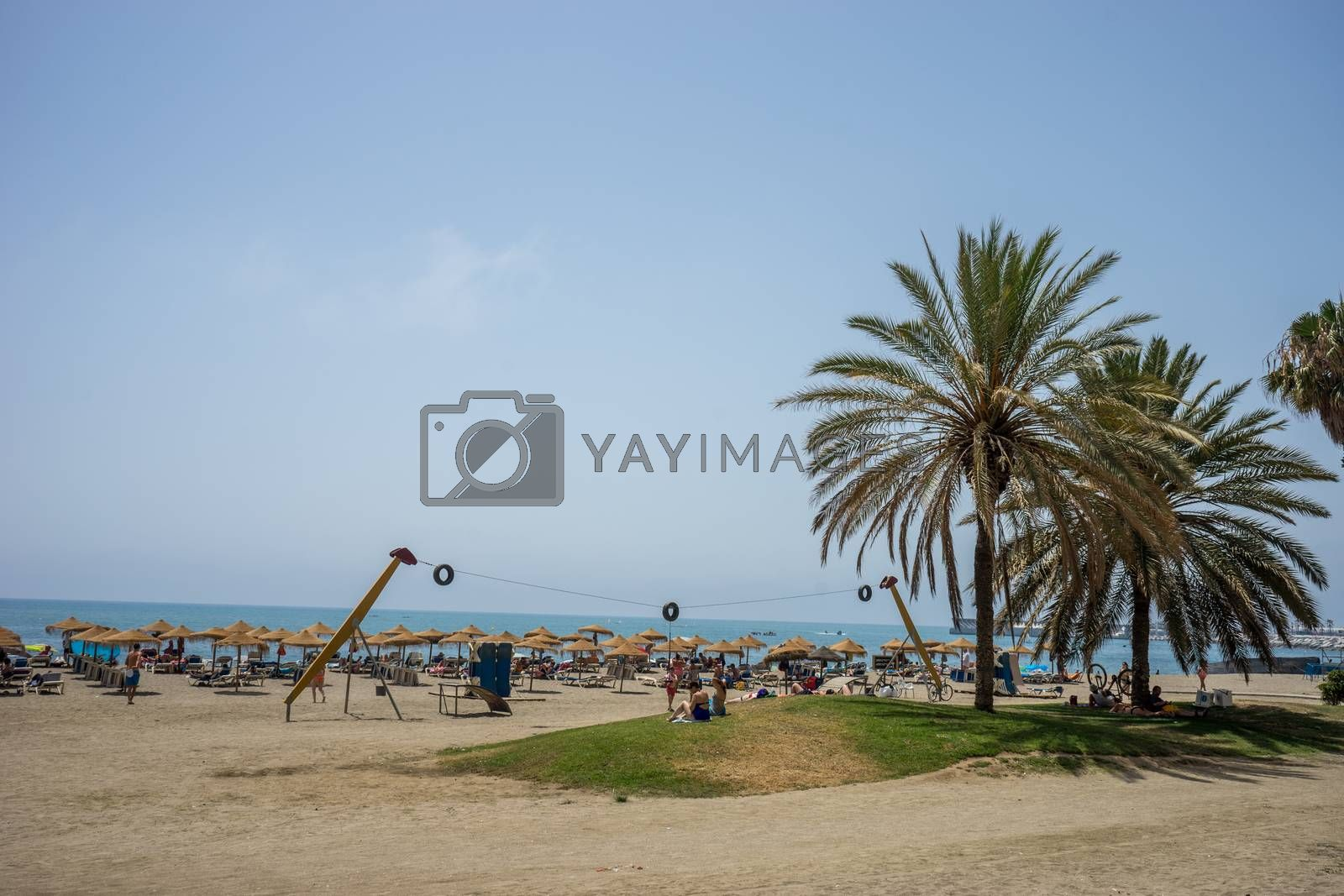 tall twin palm trees along the Malagueta beach with volleyball court in the background in Malaga, Spain, Europe on a summer day with clear skies