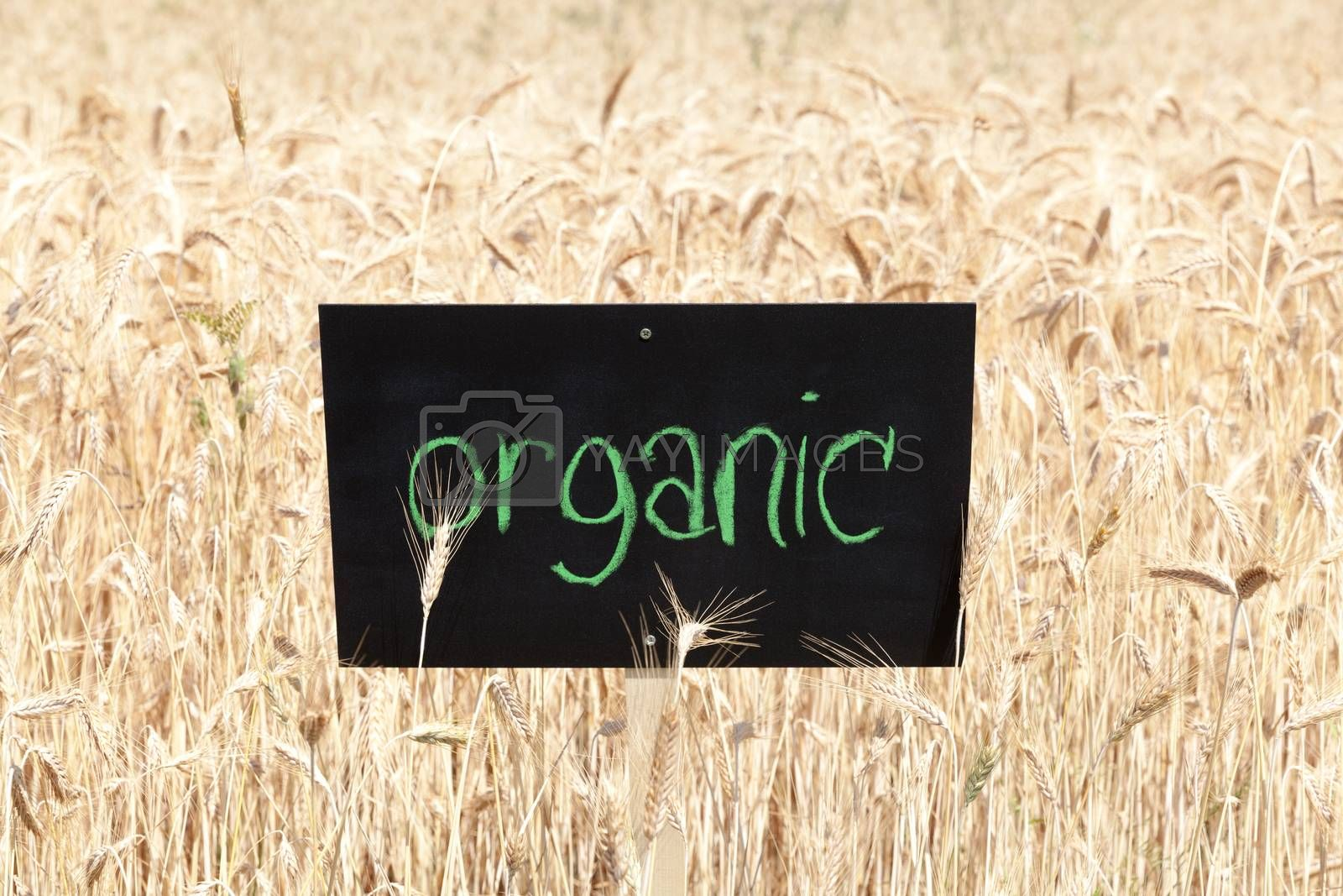 Wheat field with word organic written on blackboard