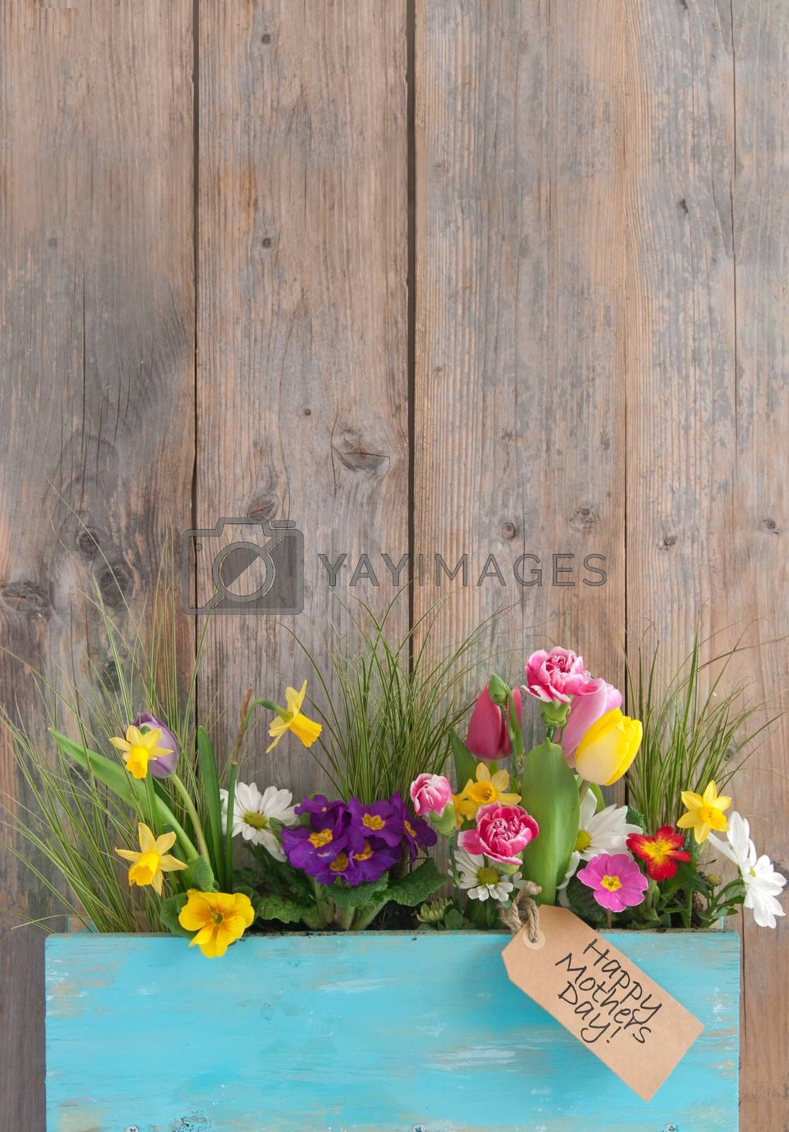 Mothers day gift label attached to a selection of spring flowers inside a wooden plant holder