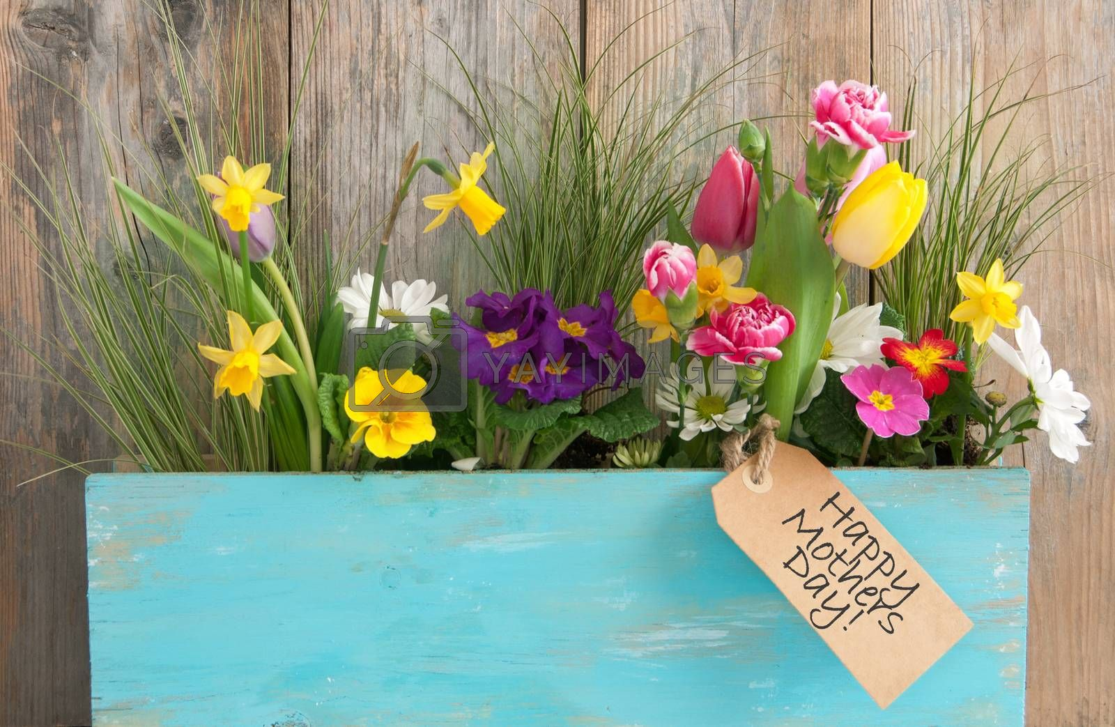 Assorted spring flowers inside a wooden plant holder with mothers day gift label