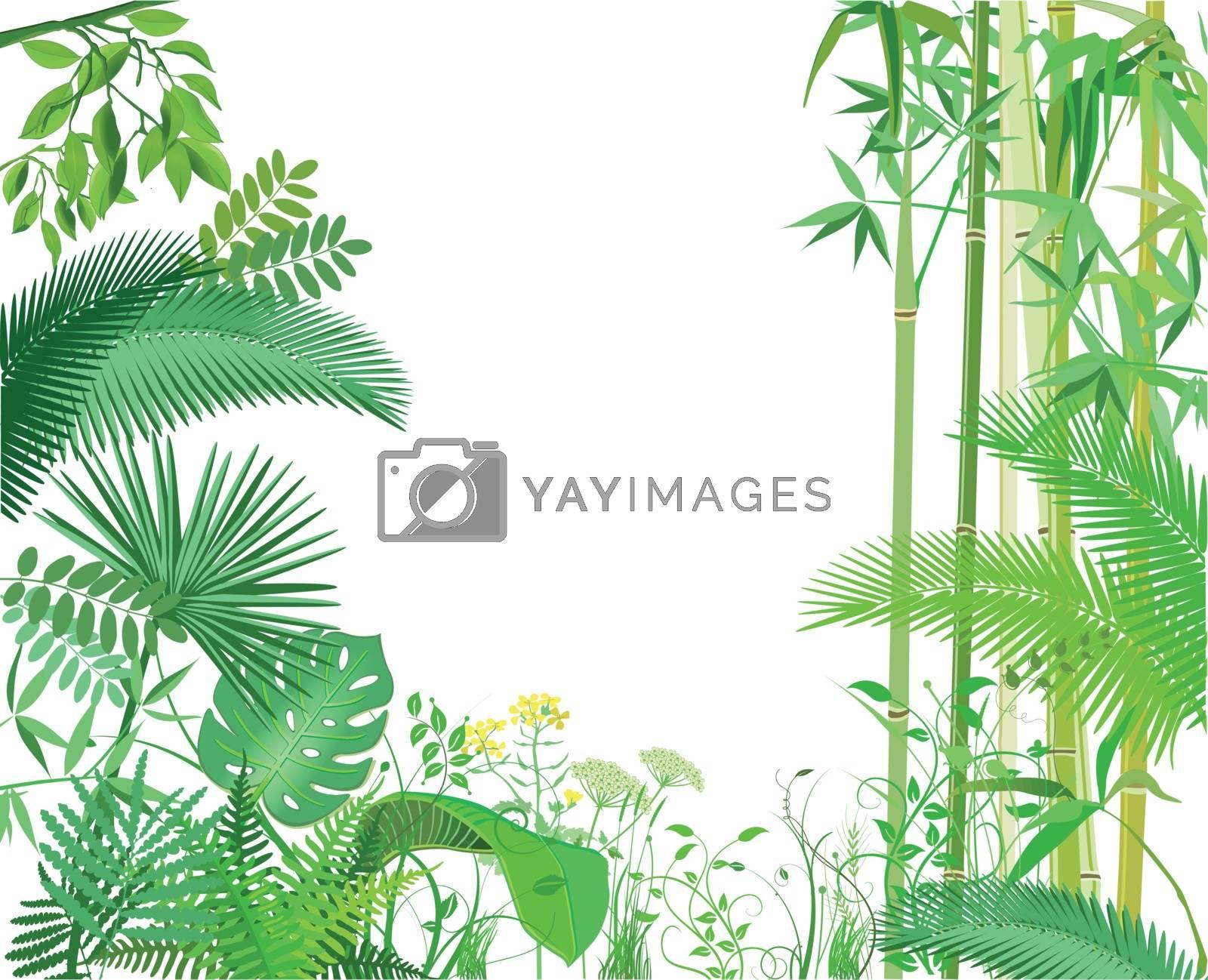 Exotic plants banner, illustration
