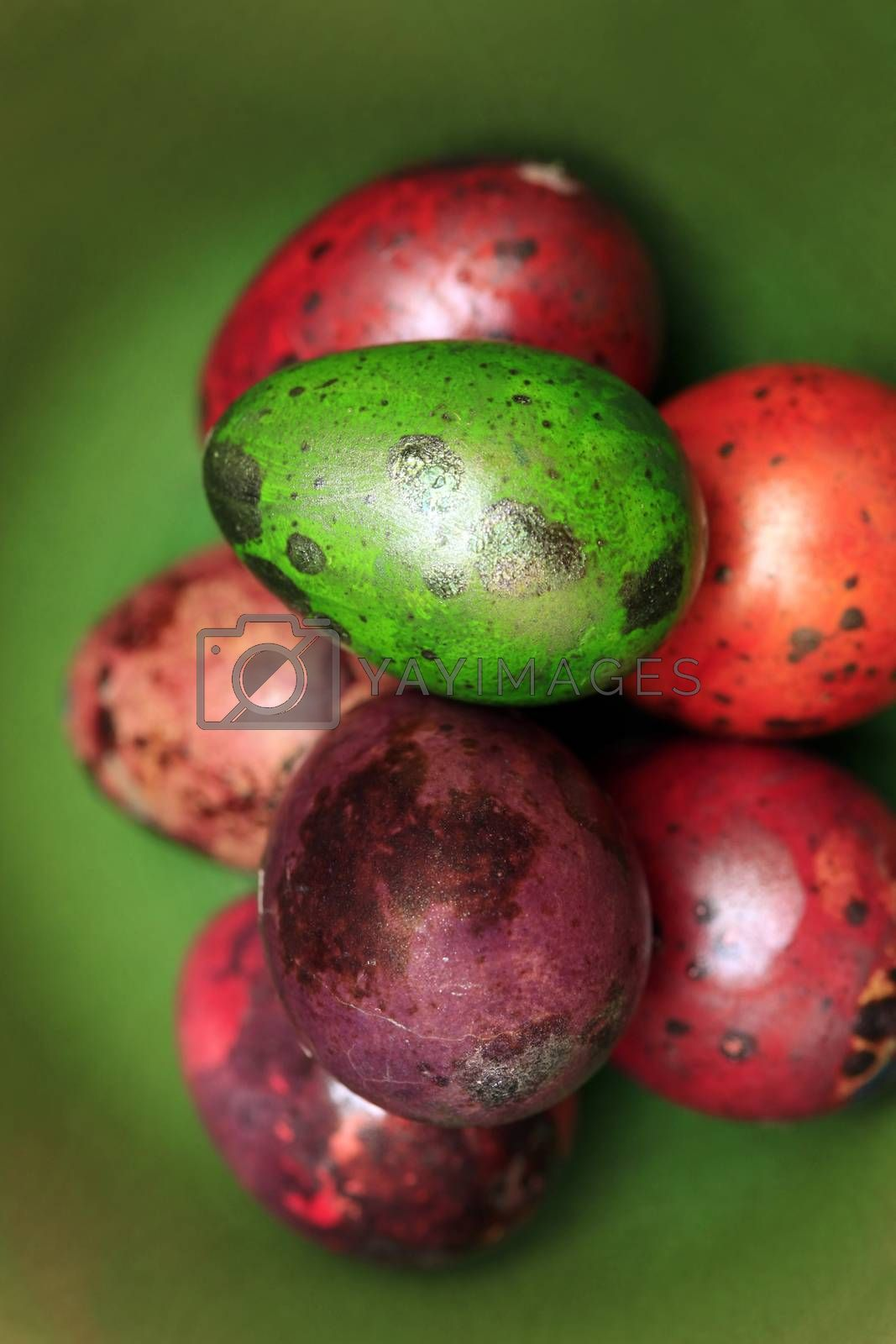 Colorful Speckled Easter Egg on Green Background