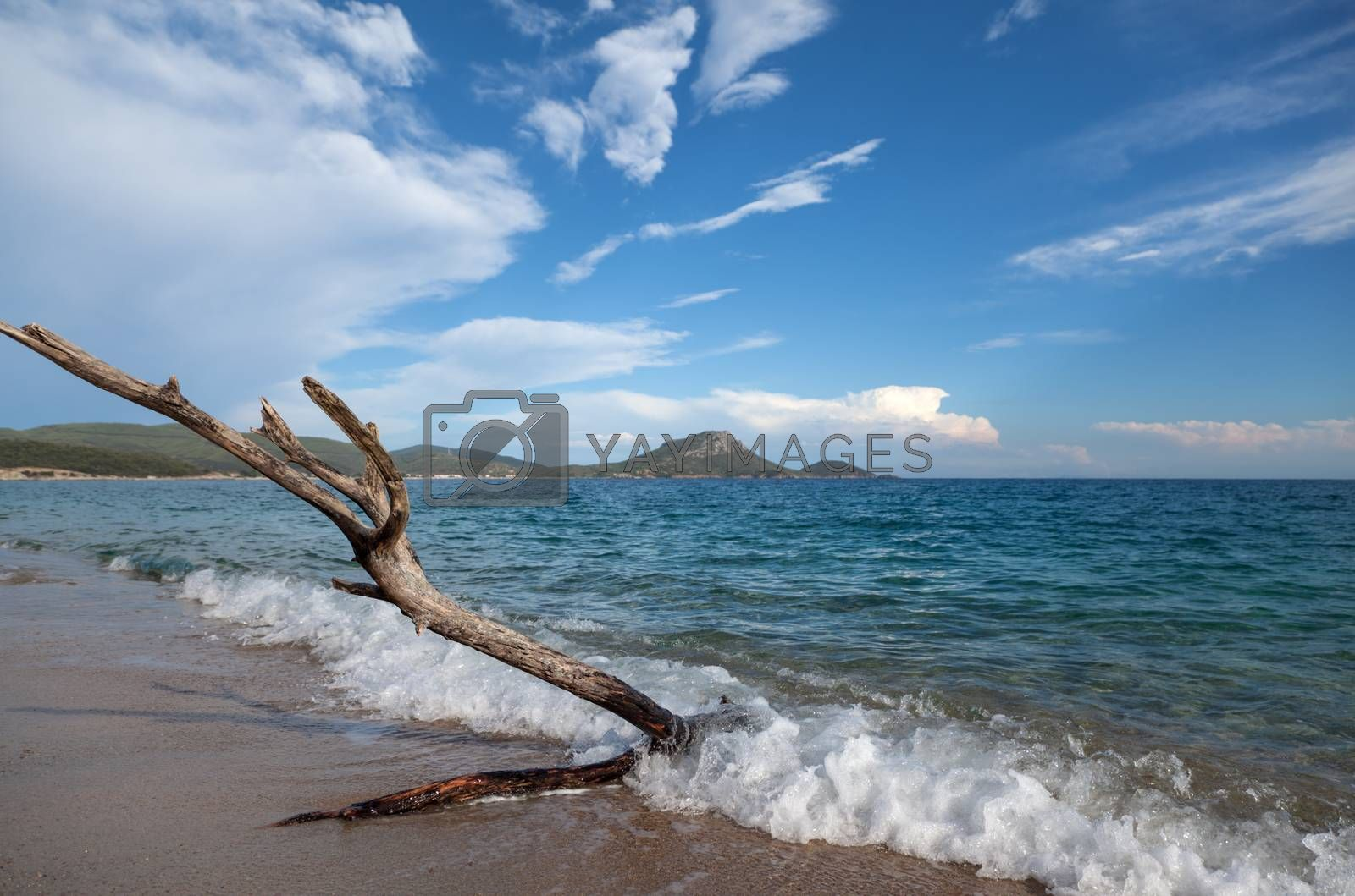An old tree branch being tossed by the sea waves on shore.