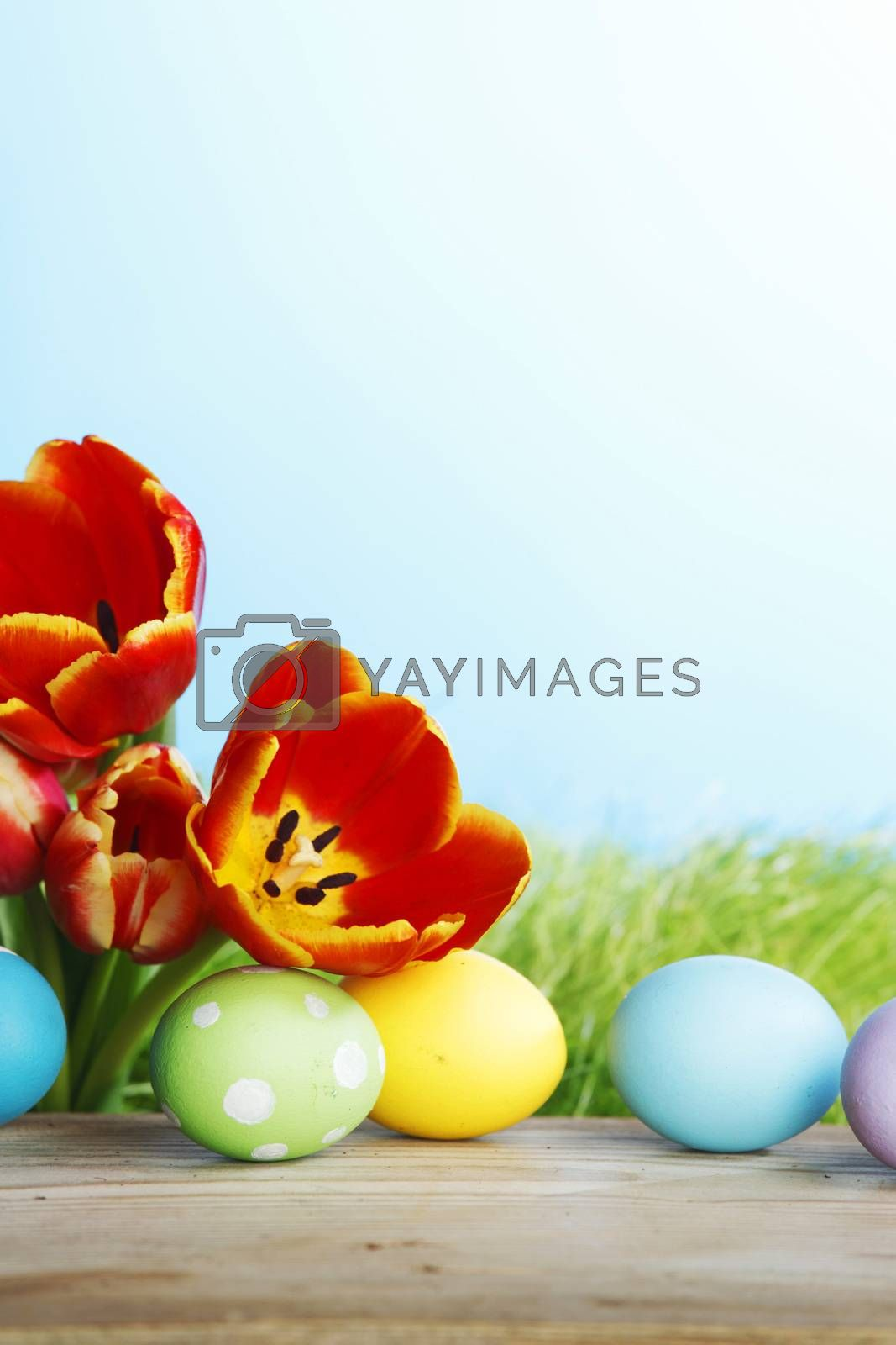 Easter eggs with tulips on spring grass background