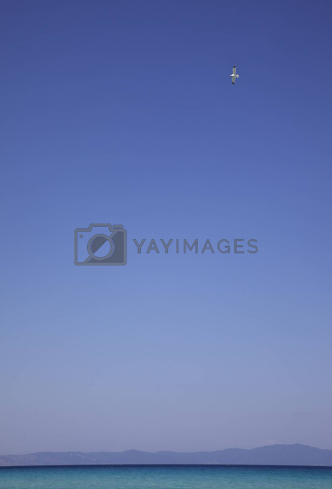 Royalty free image of Sea Sky Bird by vilevi
