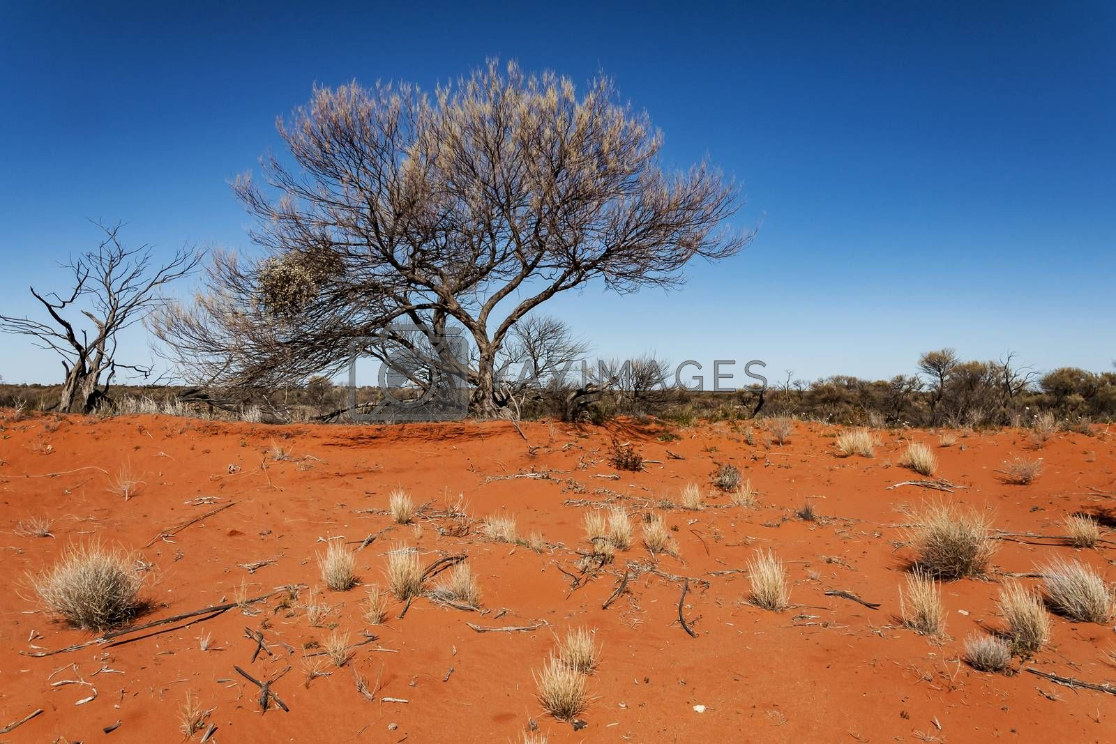 wild landscape in the Australian outback, the Red Center in south Australia