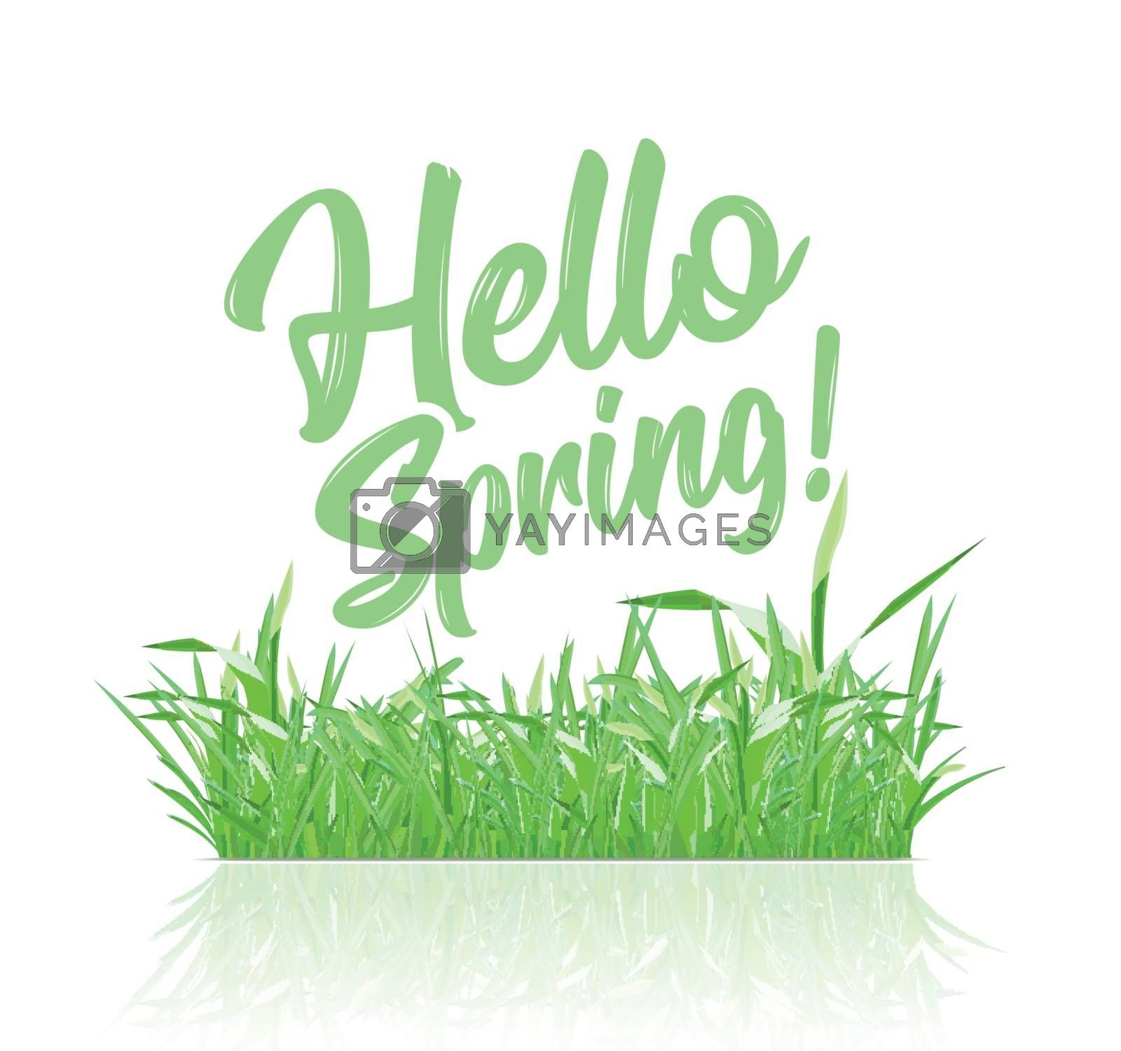 Text message hello spring, on a background of spring grass on a white background by sermax55