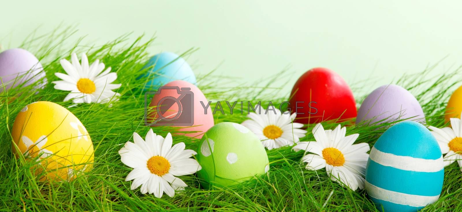 Easter composition with eggs and flowers on green meadow