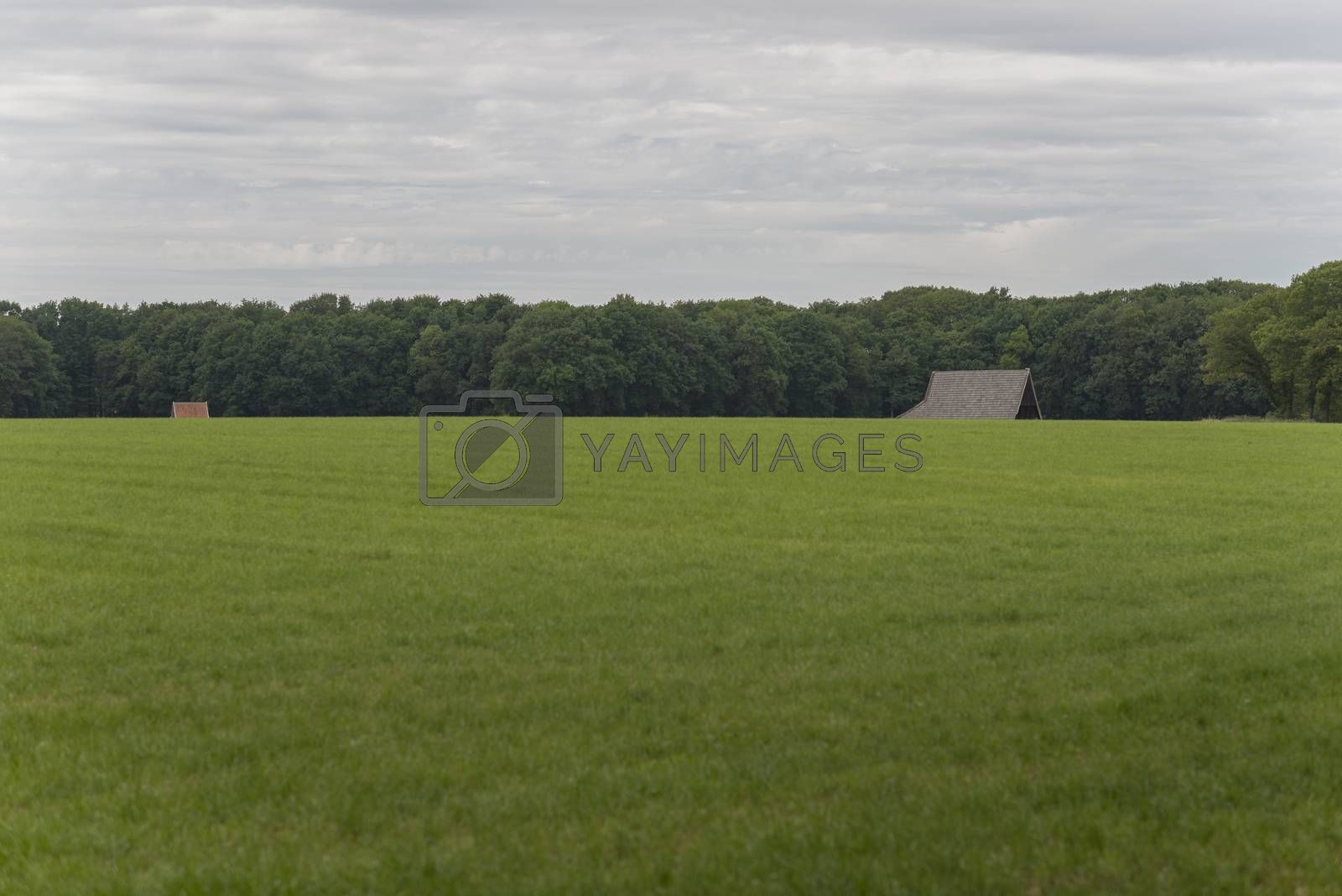 Characteristic half-open farmlands in the Netherlands  by Tofotografie
