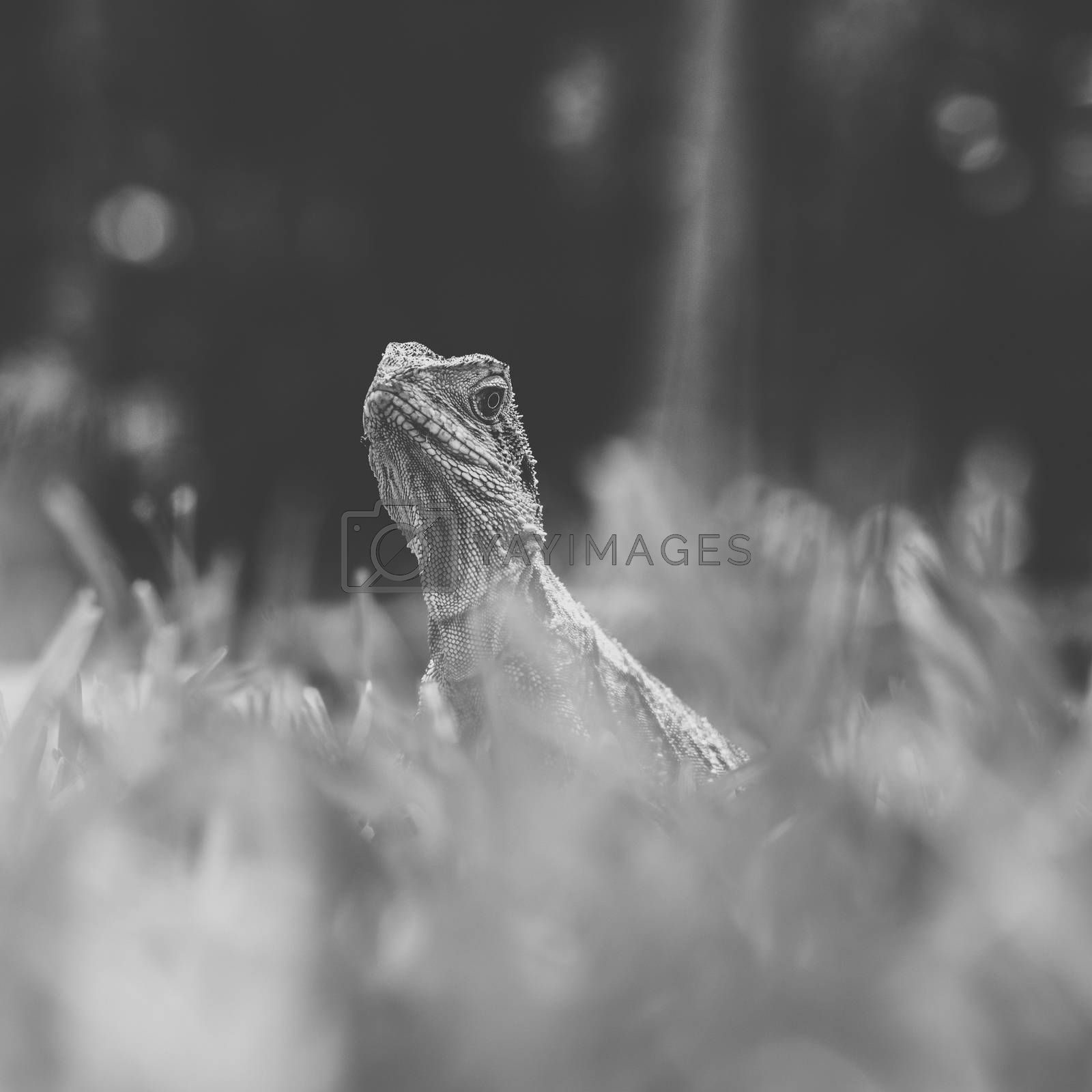 Water Dragon outside during the day time.