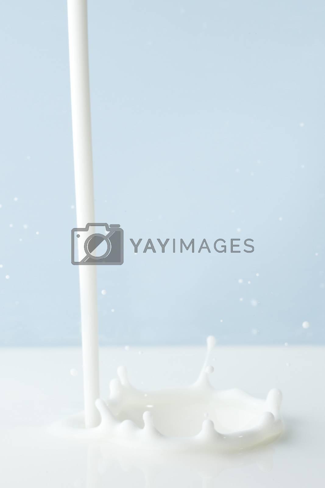 Pouring milk splash on blue background close-up