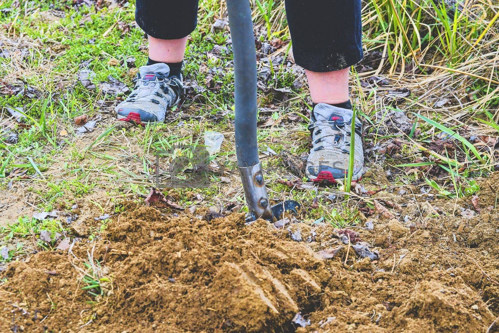 Woman digging soil with garden fork. Gardening and hobby concept.