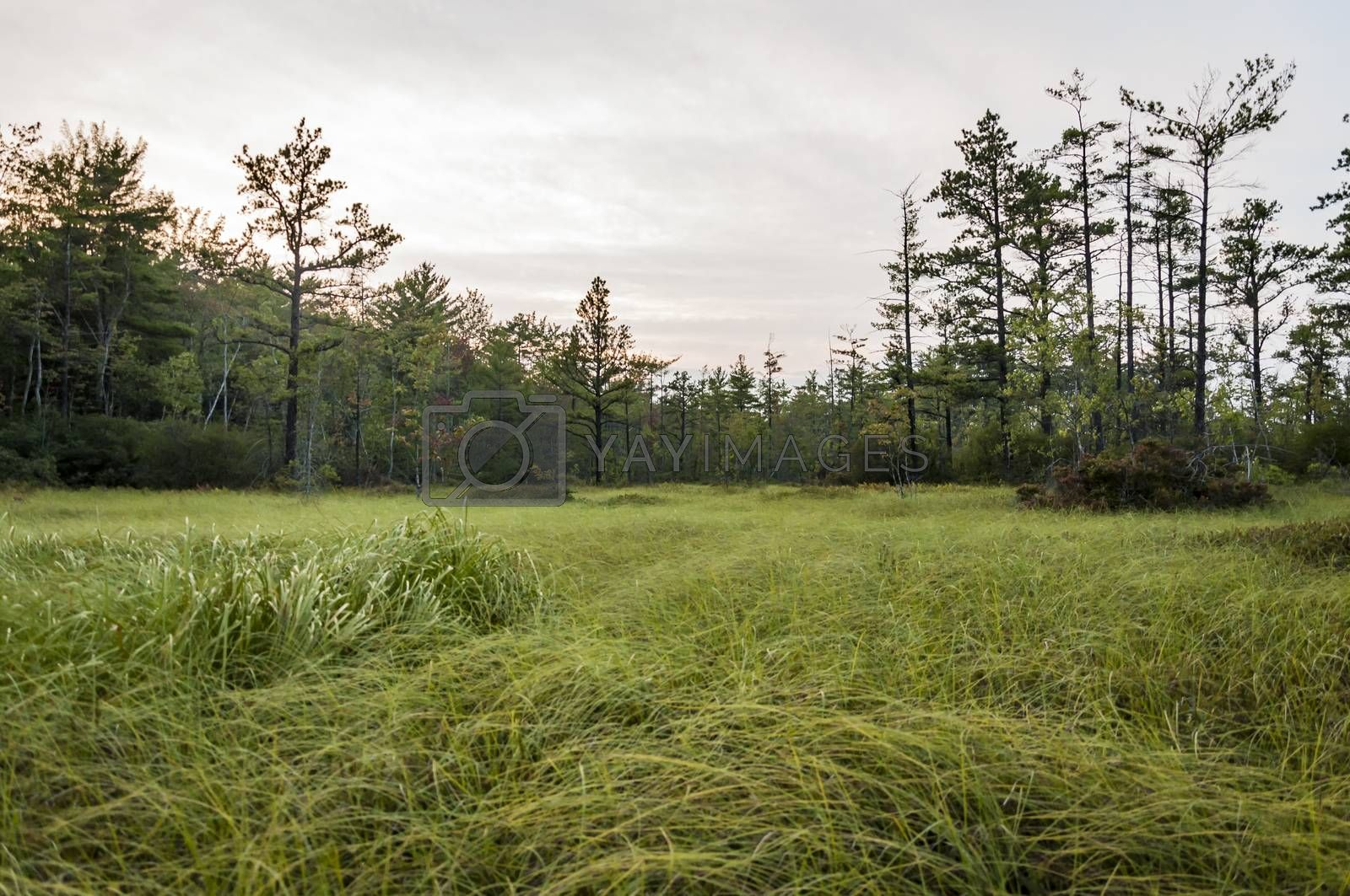 the forest and the landscape in a park in Maine, Usa