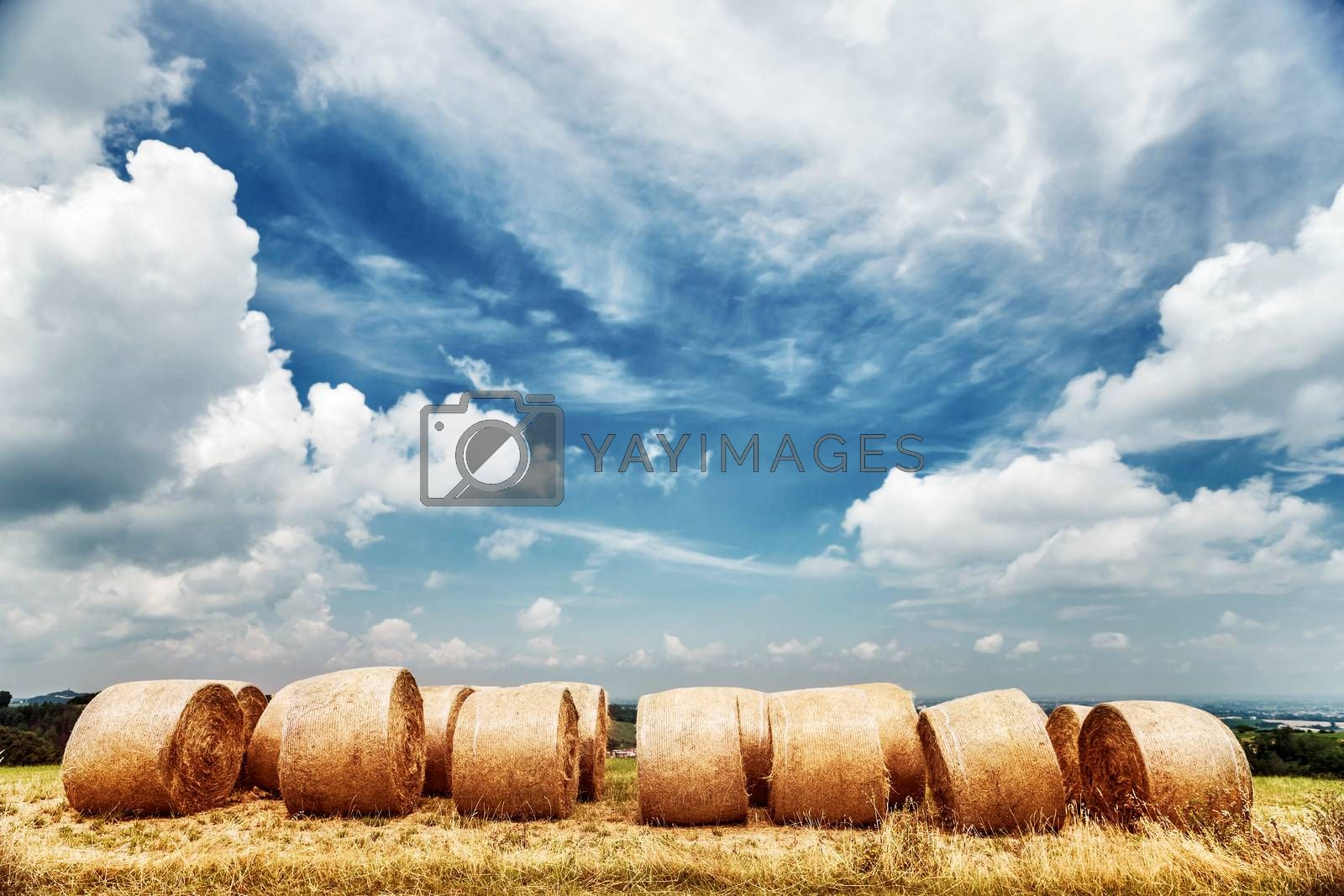 Wheat field landscape, dry bales over cloudy fall sky background, autumnal harvest season, farming fields, beautiful golden haystack, agriculture industry, Italy