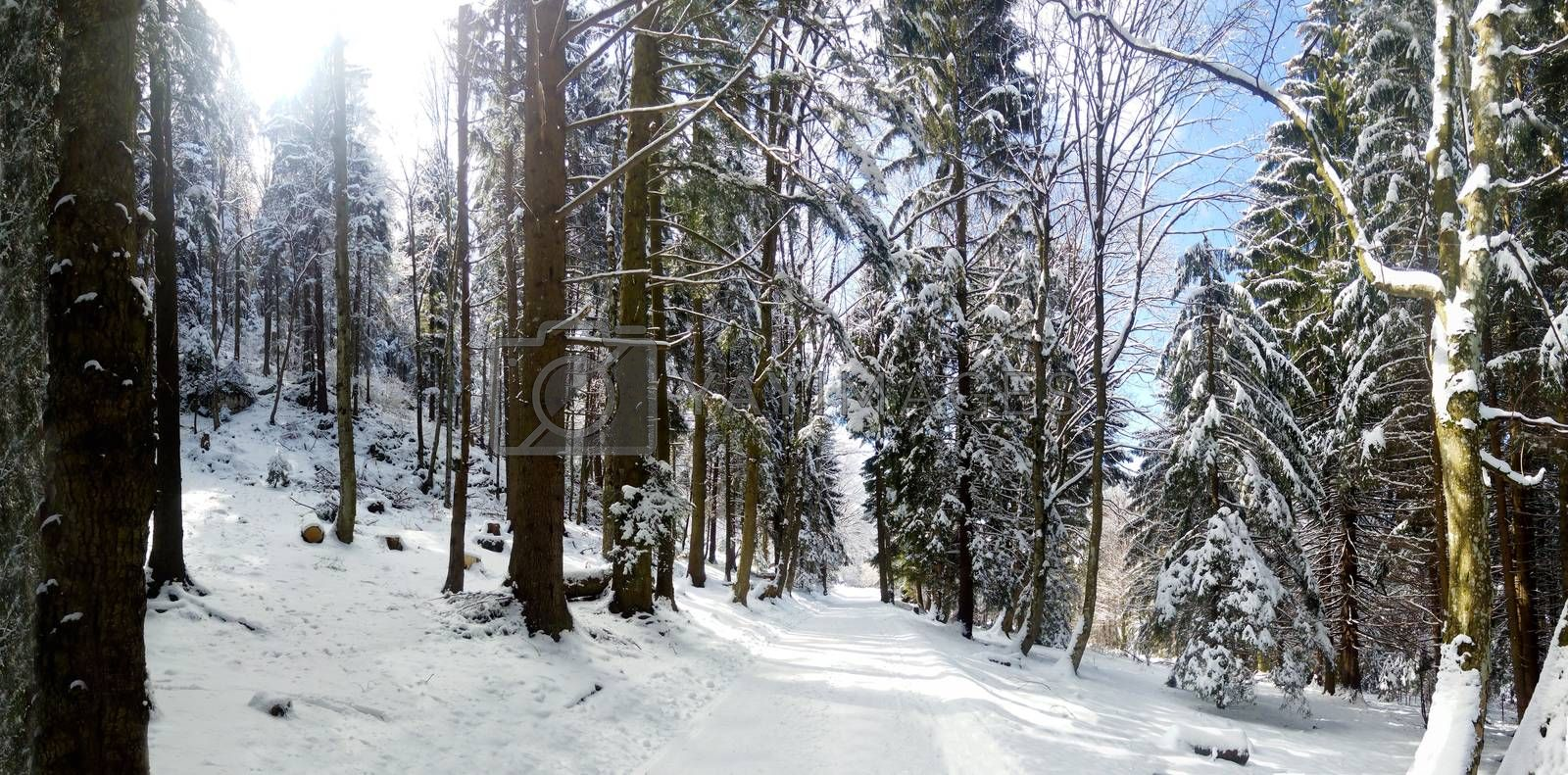Panoramic view of a mountain forest road on winter