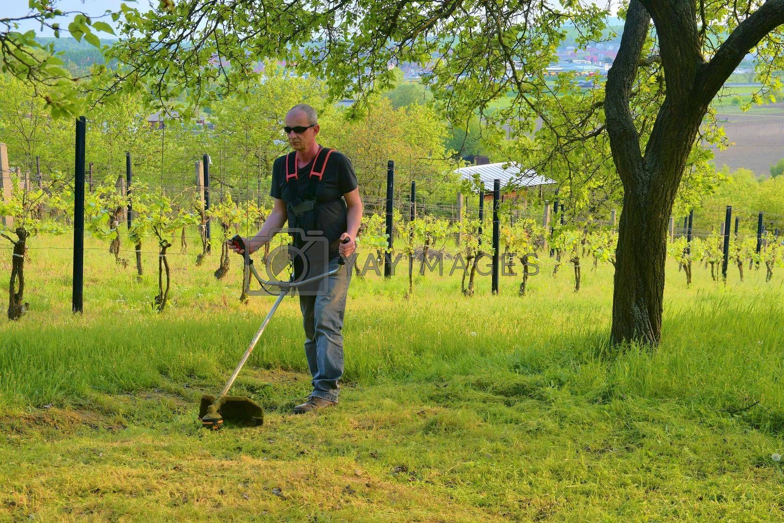 Midle aged man using a brush cutter. Mature man in the garden. Gardening concept.