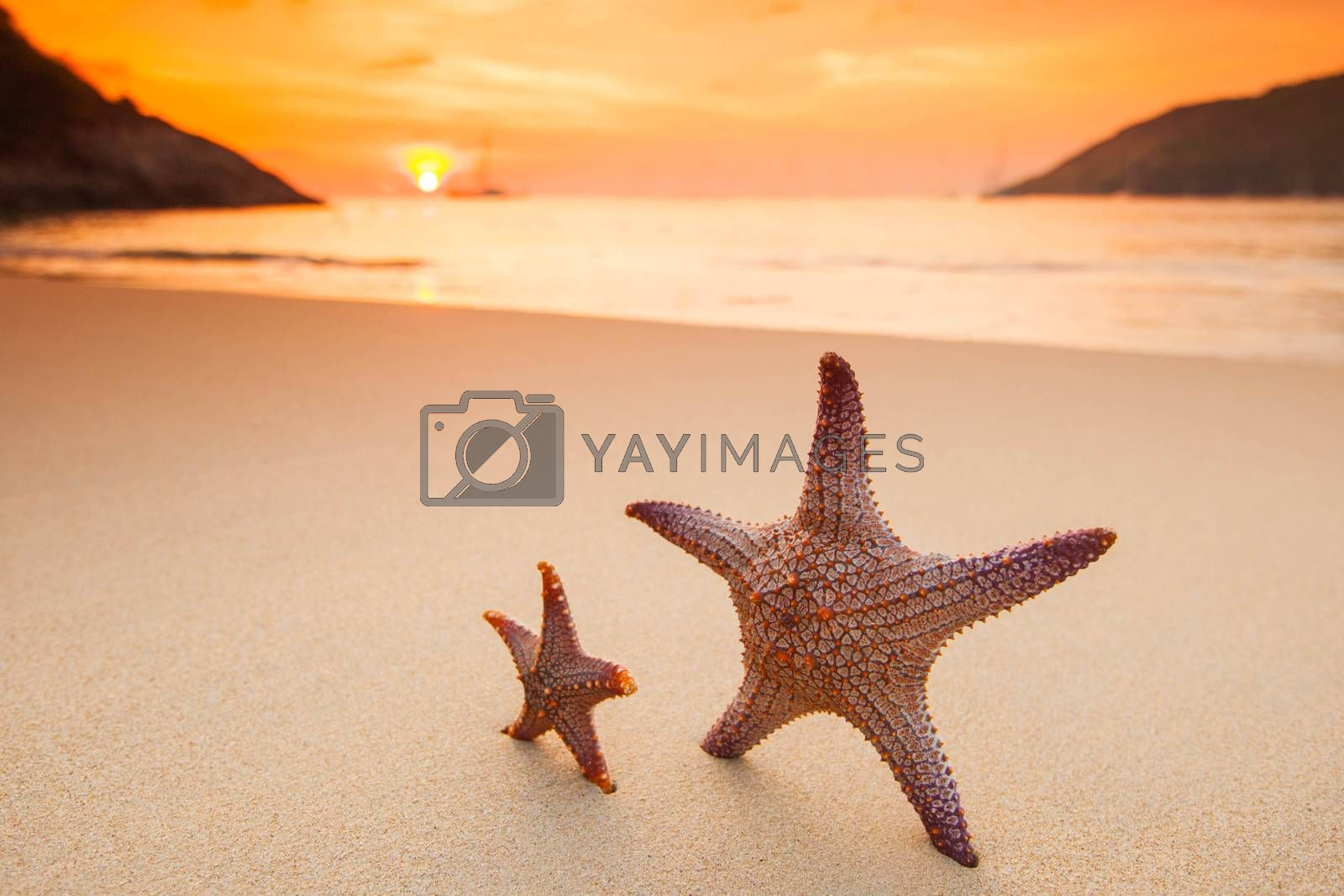 Two starfish on the beach and beautiful sunset in Thailand