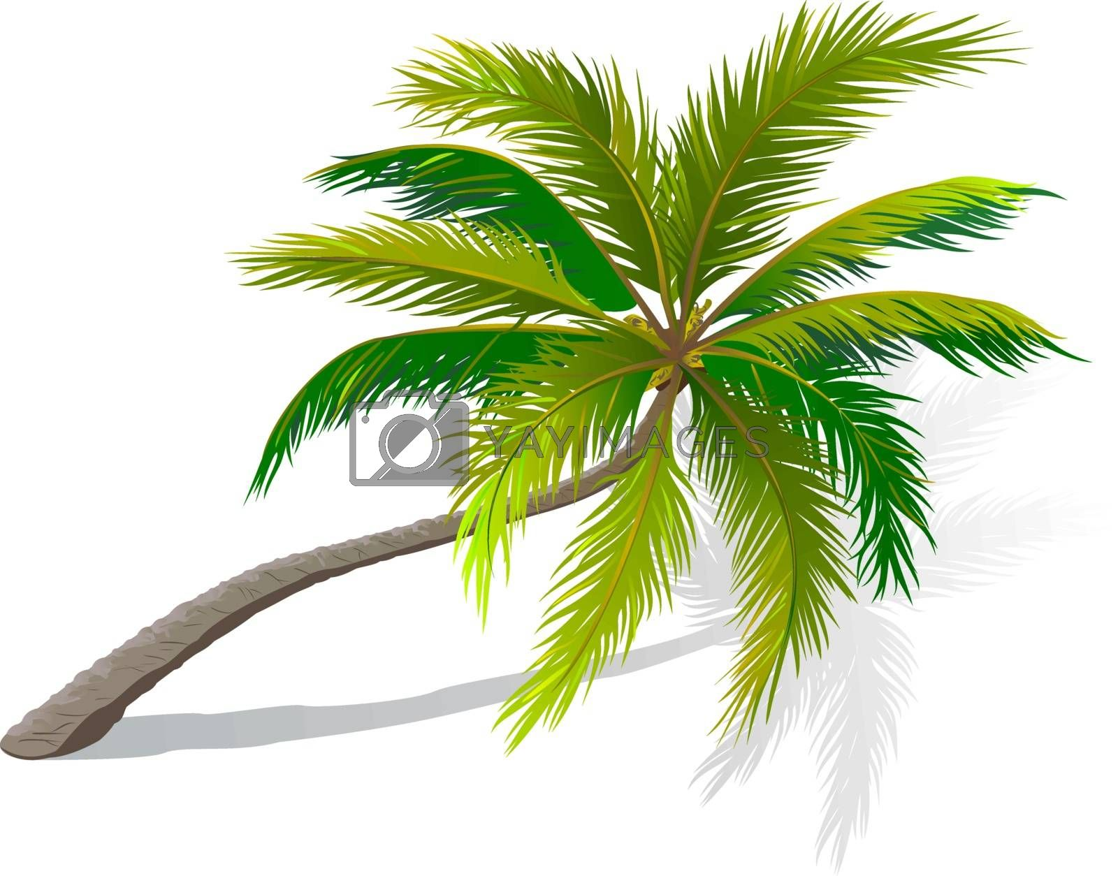 Curved palm tree by liolle