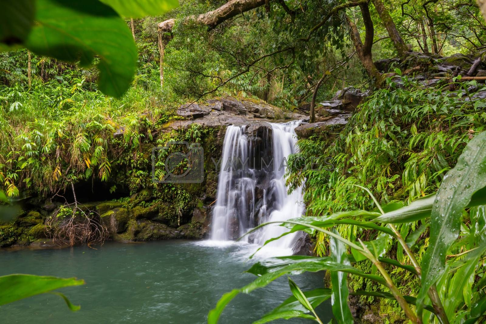 Beautiful waterfall in tropical rainforest in Hawaii island, USA