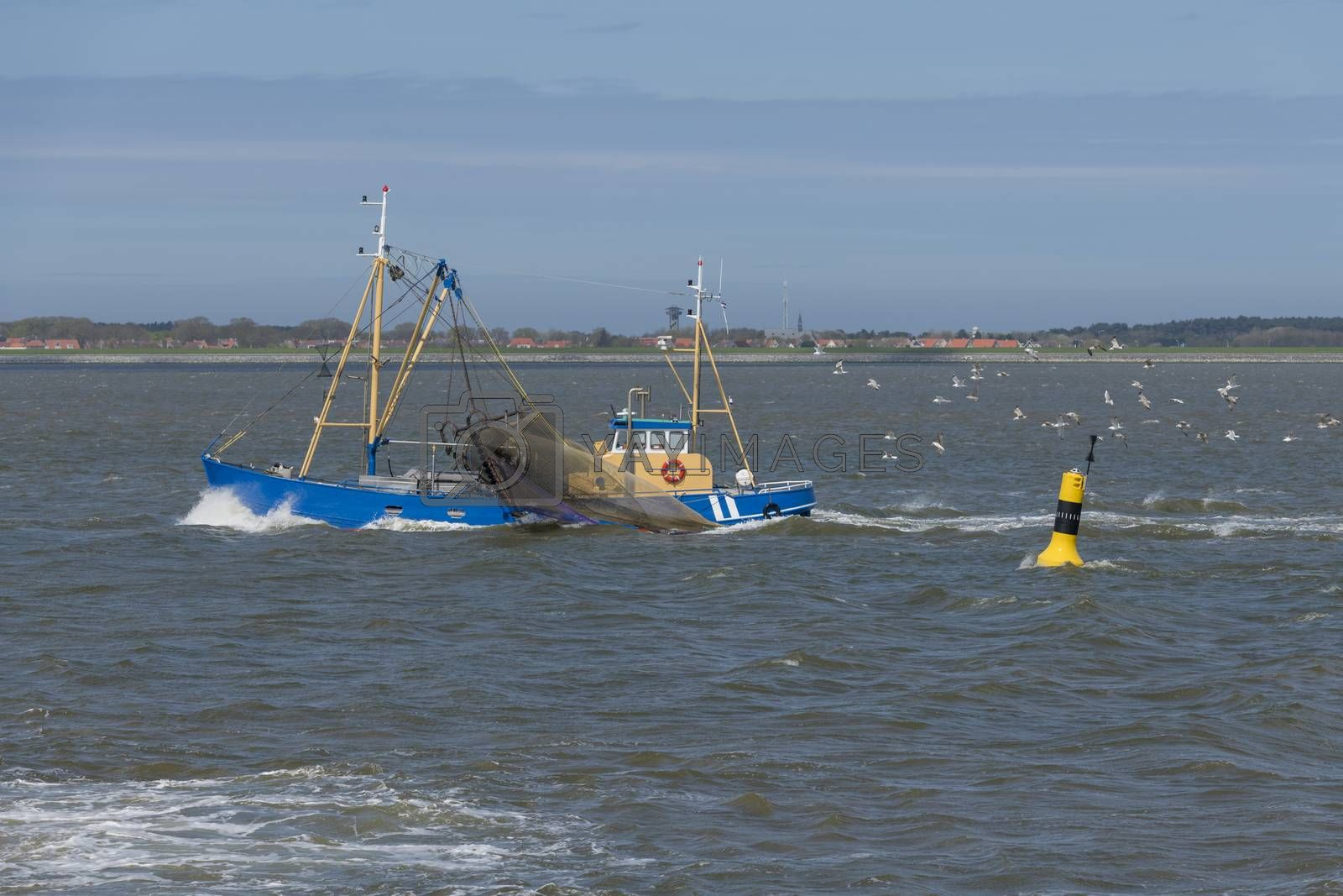 Commercial shrimp fishing boat on the UNESCO protected Wadden Sea near the island Ameland in the North of Netherlands