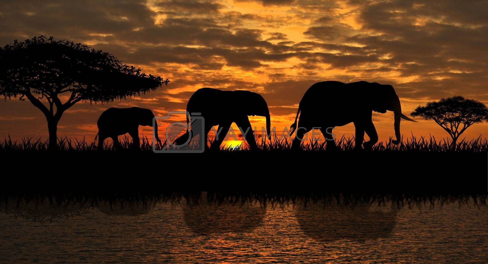 Silhouettes of elephants on a sunset background. Elephants against the backdrop of the sunset and the river.