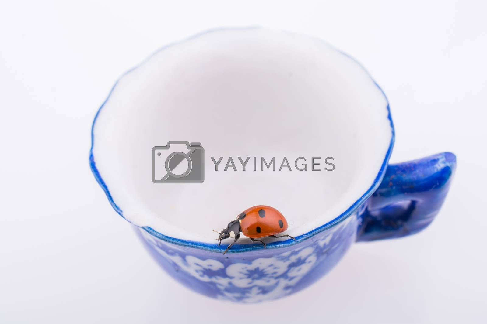 Beautiful photo of red ladybug walking on a cup