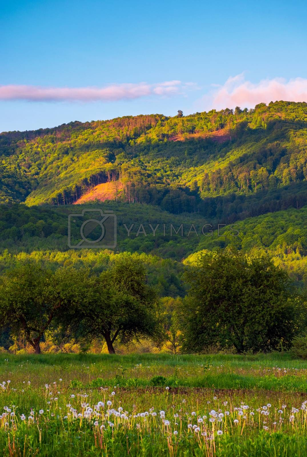 beautiful mountainous countryside at sunrise. lovely summer landscape with pink clouds
