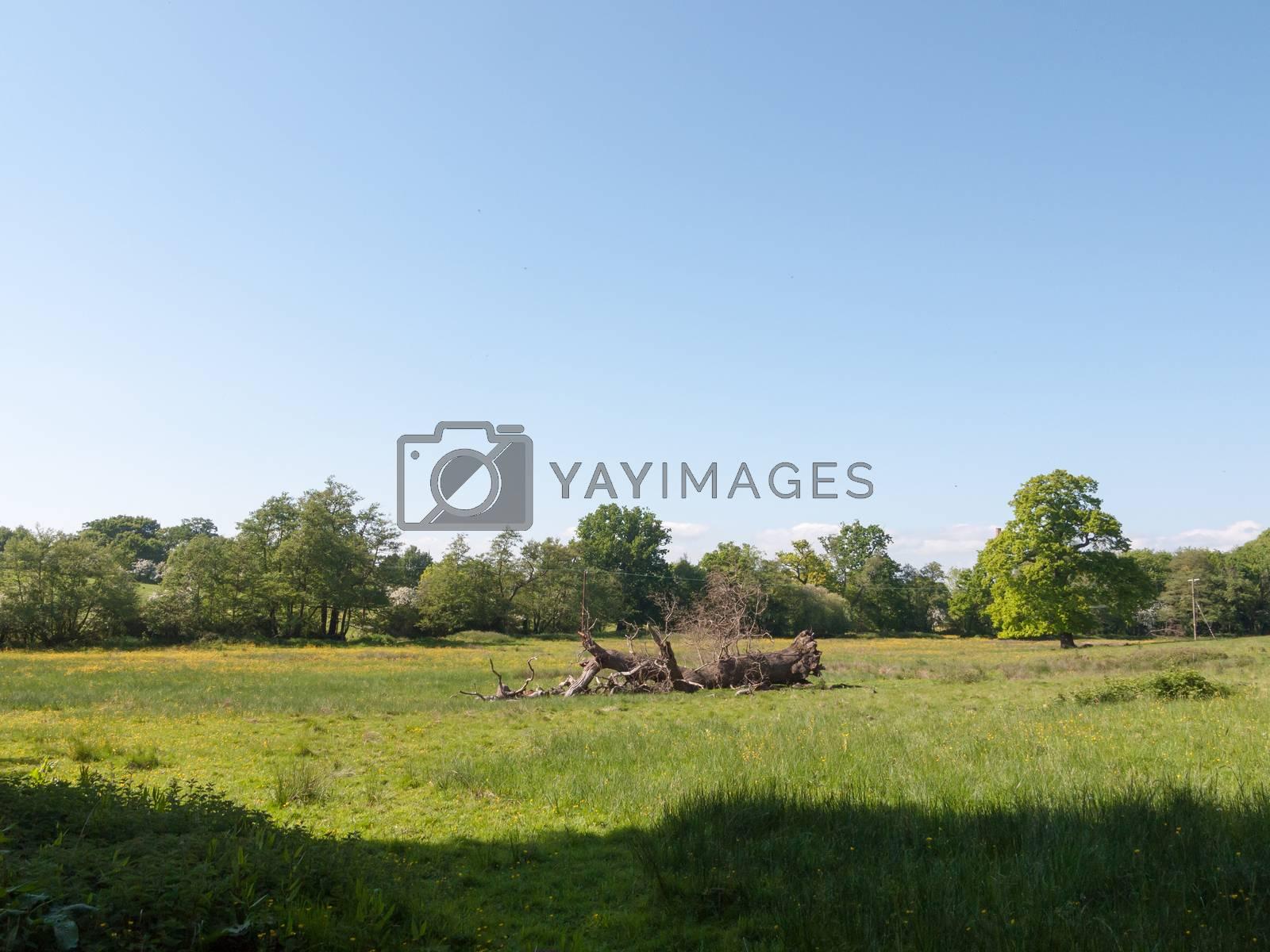 fallen tree in field spring day blue sky green grass trees; essex; england; uk