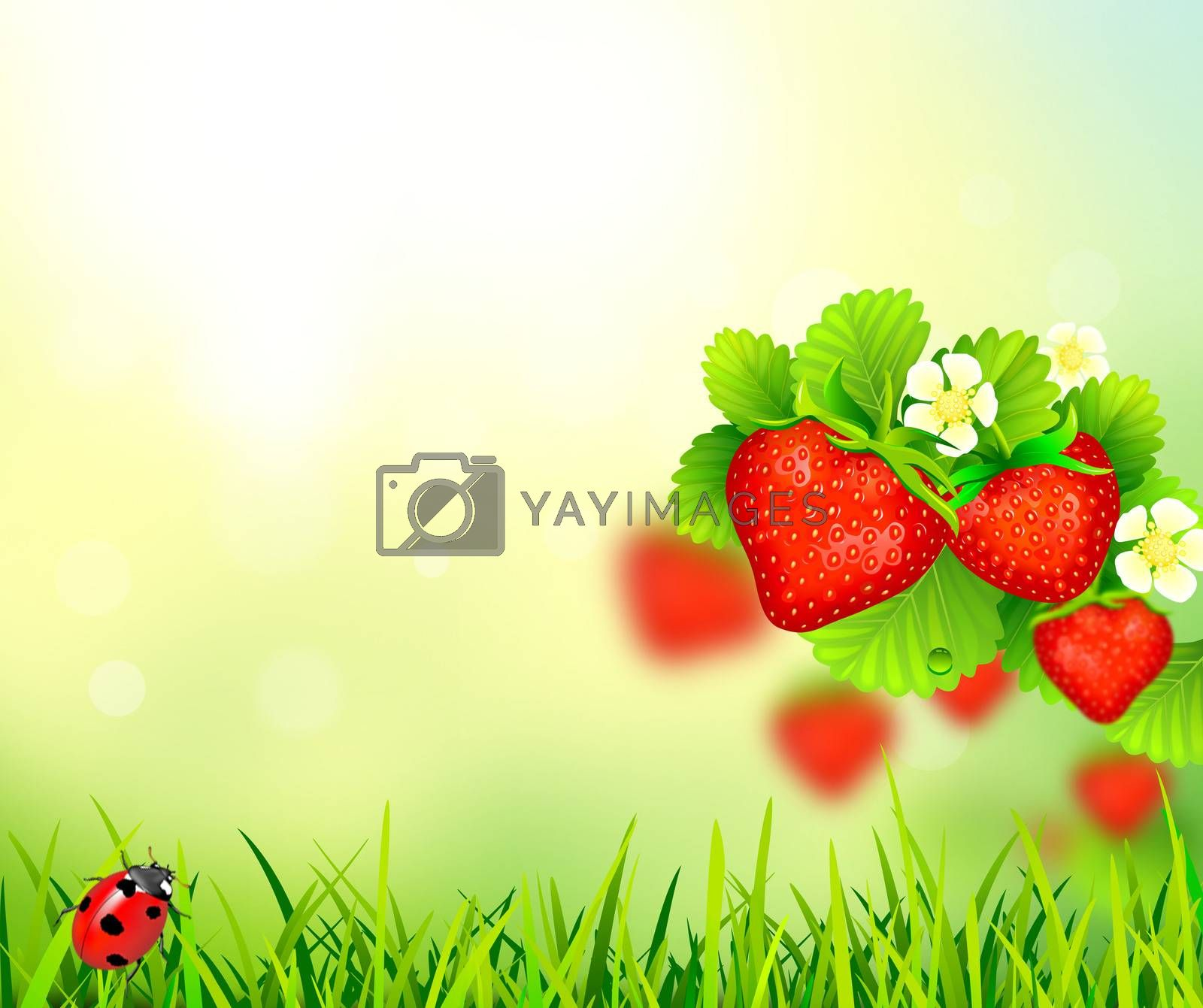 Summer background with strawberry. Strawberries on an abstract background.