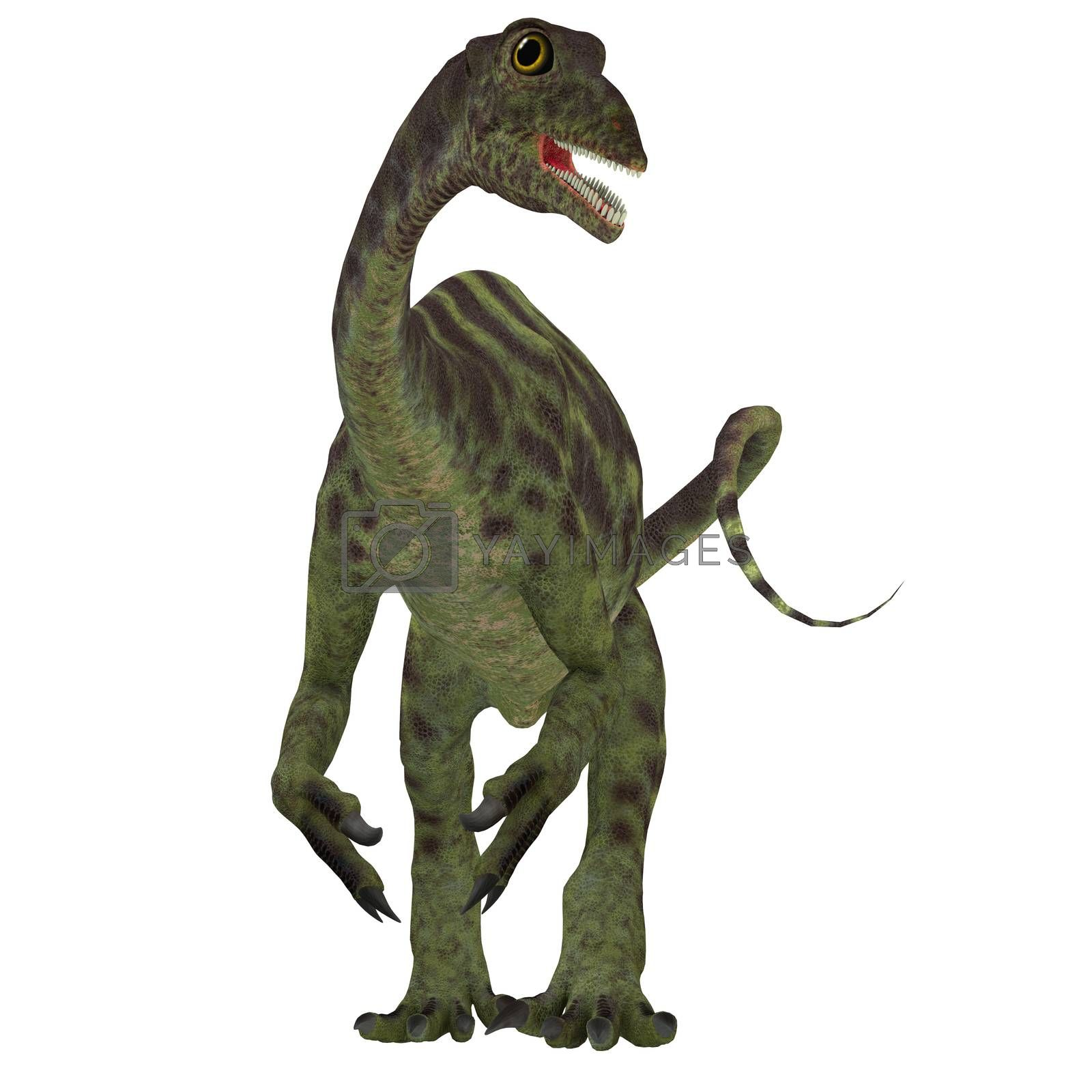 Anchisaurus was a omnivorous prosauropod dinosaur that lived in the Jurassic Periods of North America, Europe and Africa.