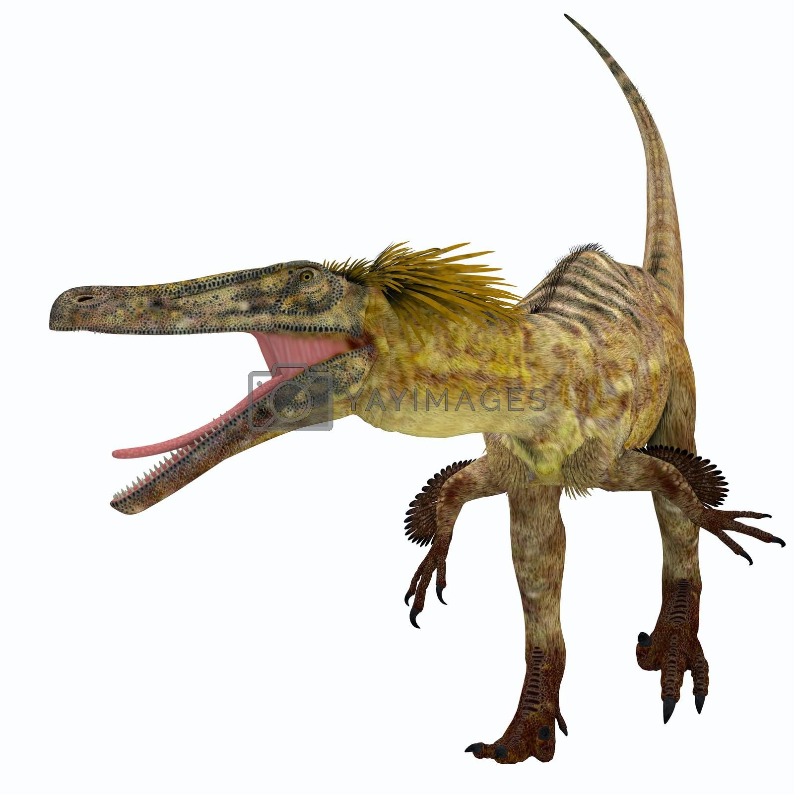 Austroraptor was a carnivorous theropod dinosaur that lived in Argentina in the Cretaceous Period.