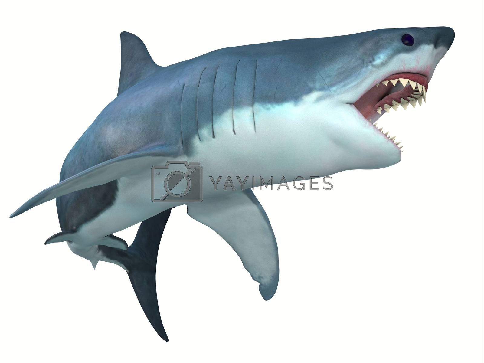 The Great White shark can live for 70 years and grow to be 21 feet long and live in coastal surface waters.