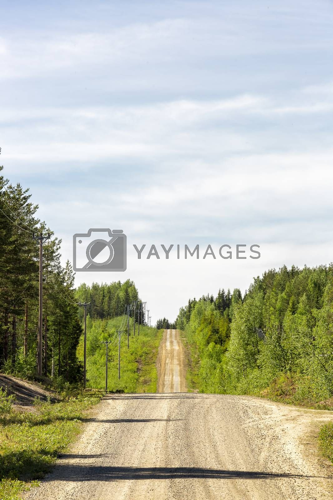 Gravel Road in Sweden with Forest.