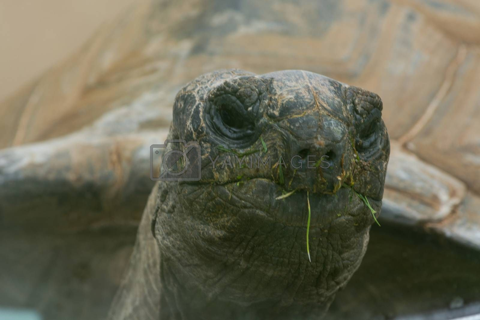 Turtle, reptile, animal head in closeup