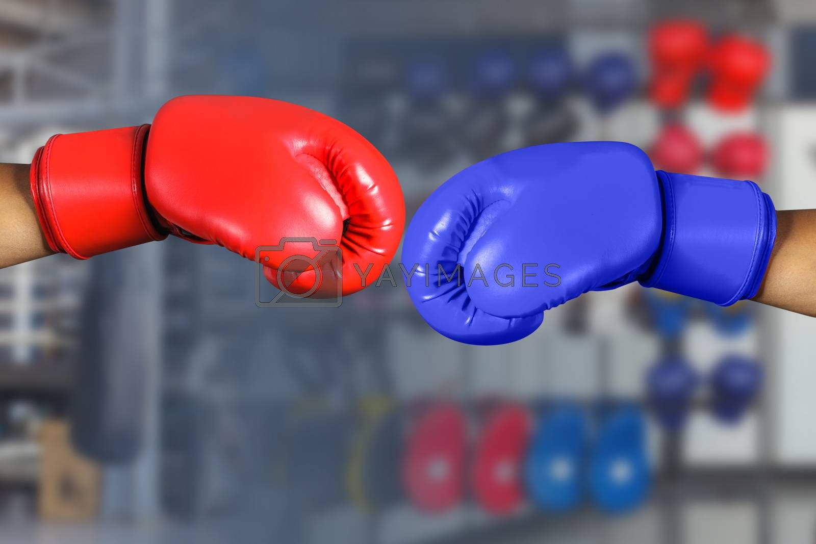 Red and Blue boxing gloves in Gym Fitness