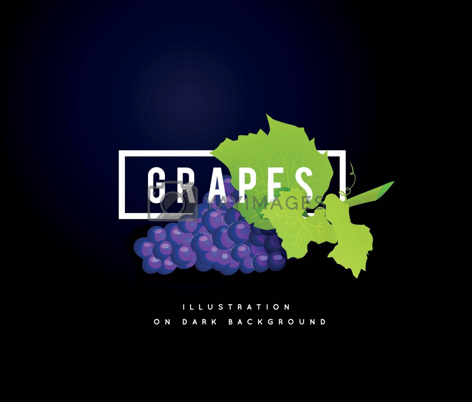 Grape branch with blue grapes on white background. Vector illustration on dark background